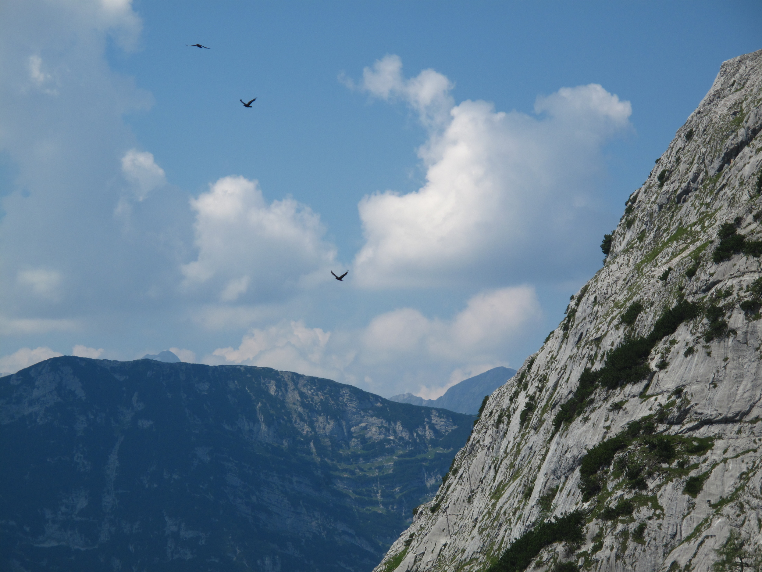 Mountains and birds and sky.