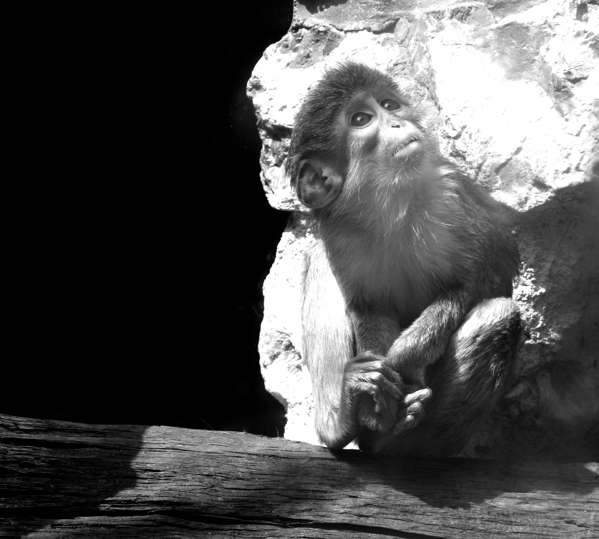 Monkey black and white photograph - Prague Zoo