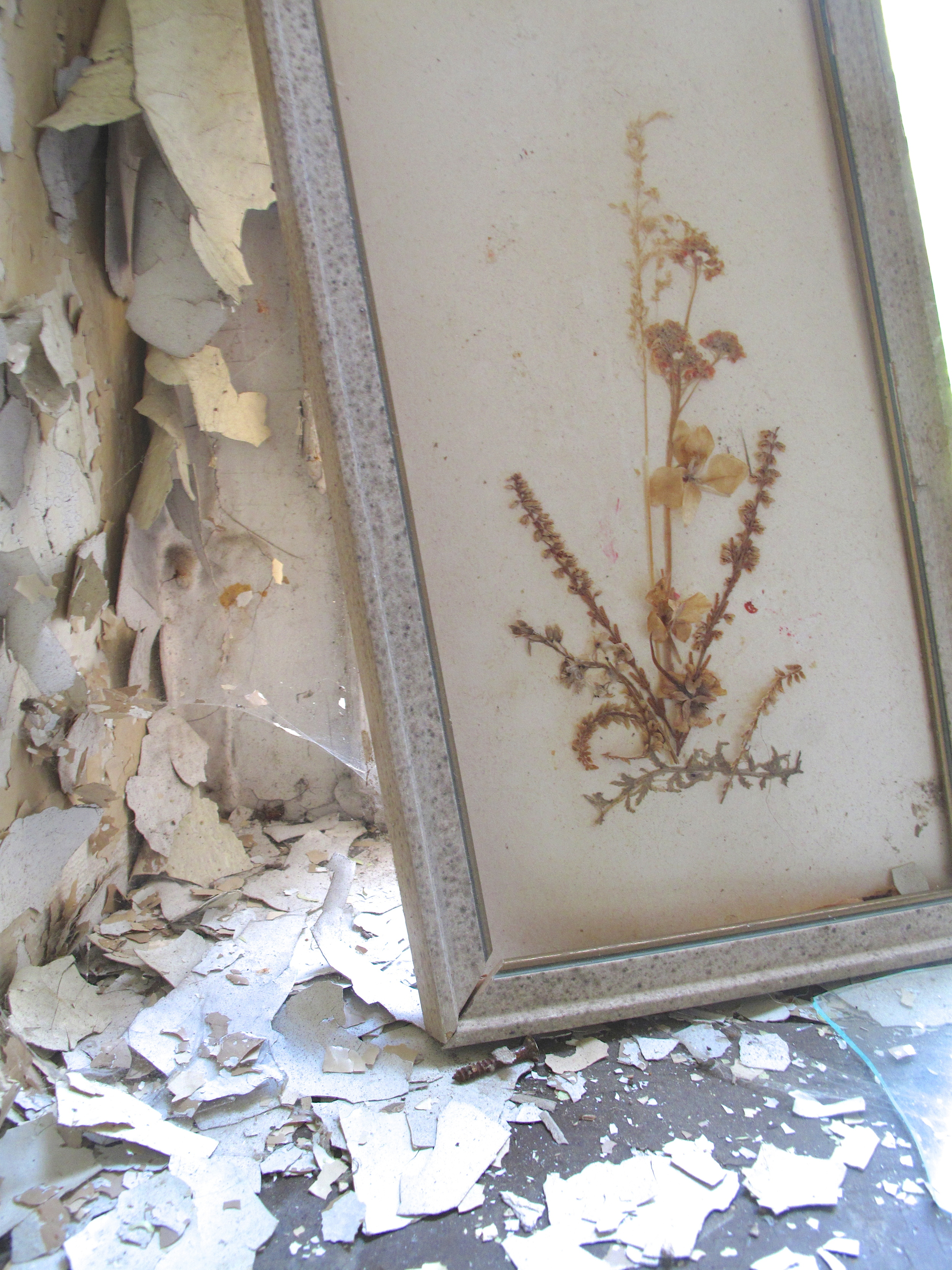 Shattered picture frame and dried flowers inside the old Elisabeth Sanatorium