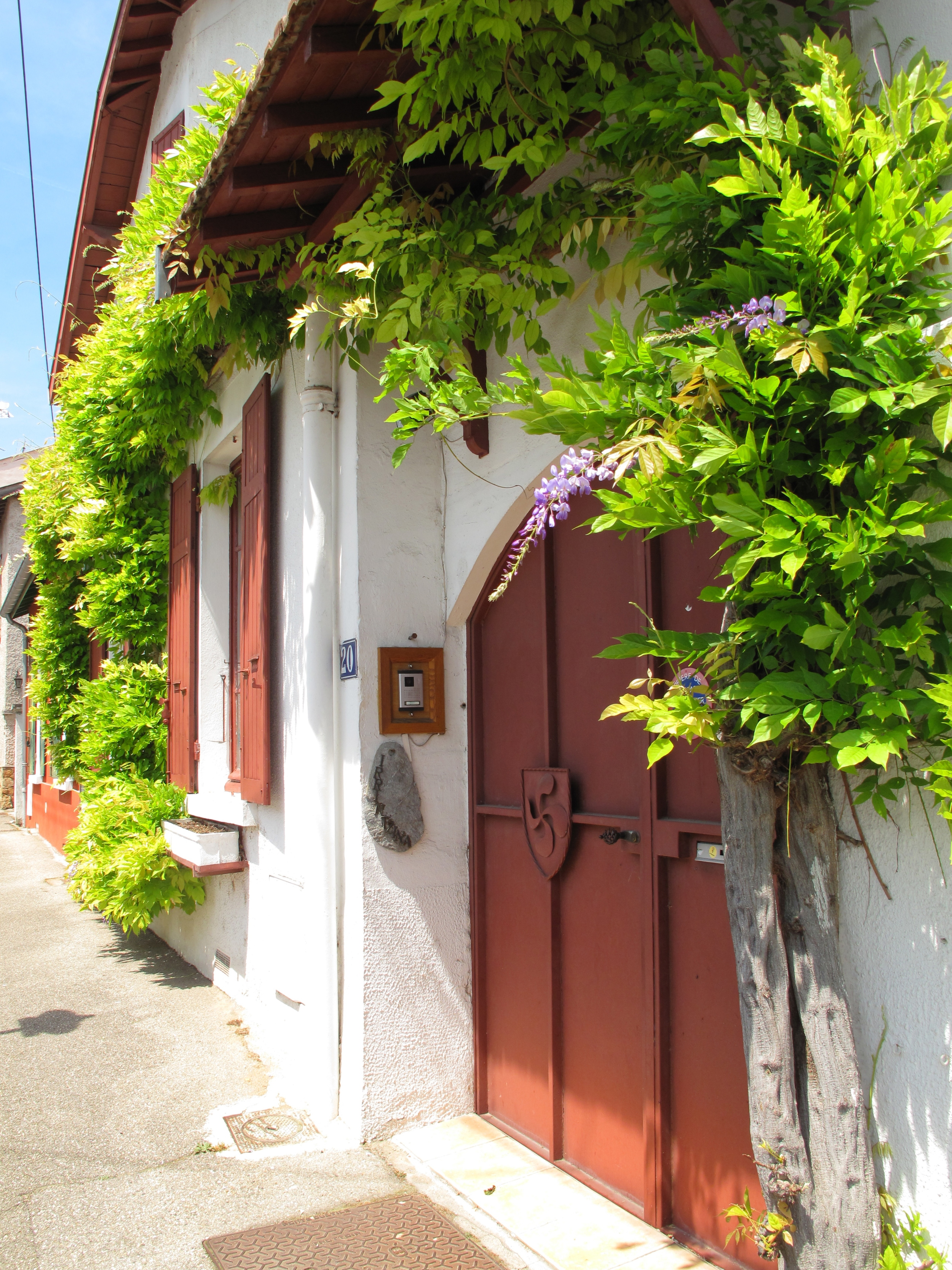 Wisteria and leaves on a white washed house in Oullins, France.