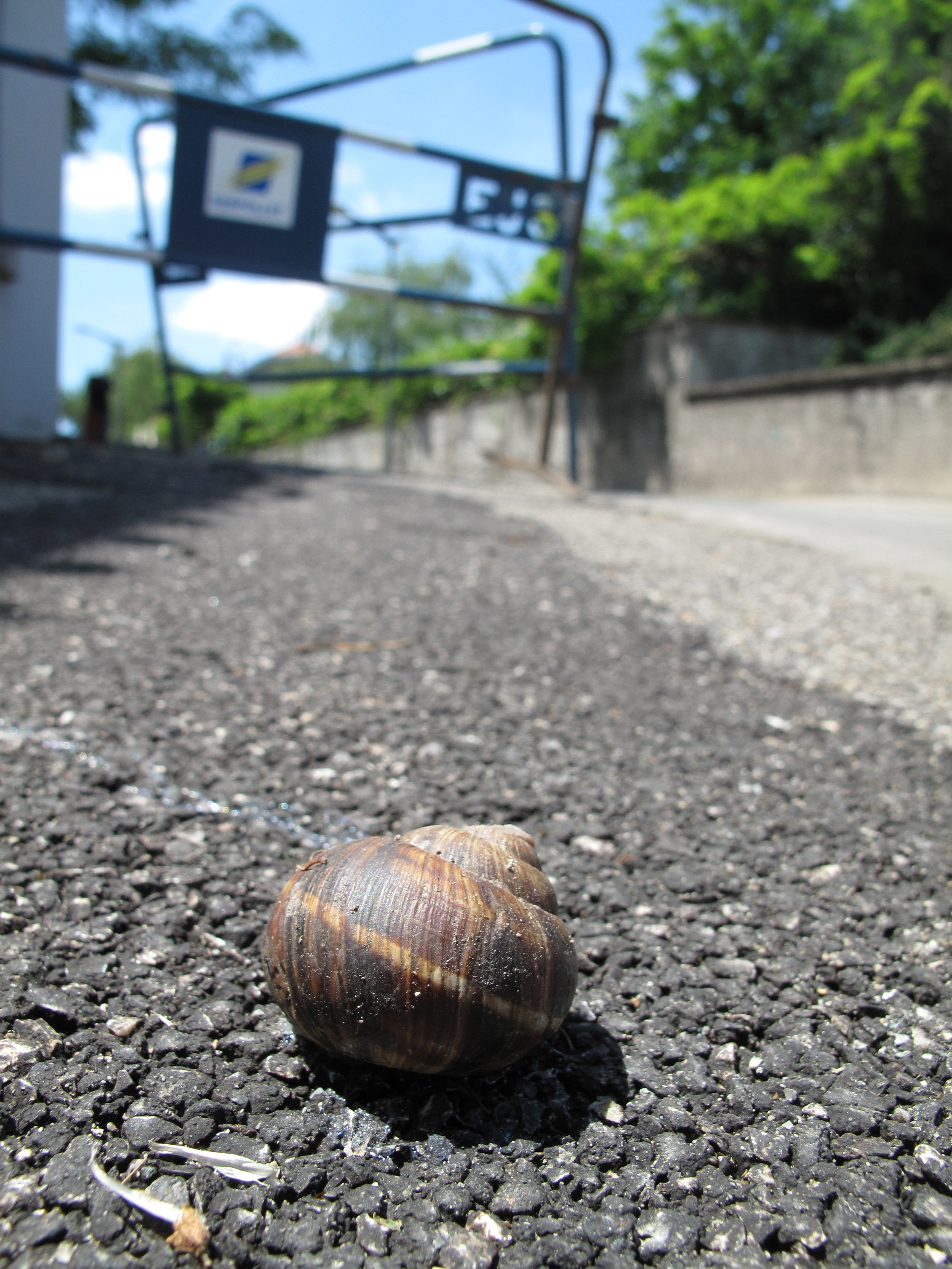 Saving snails from the footpath.