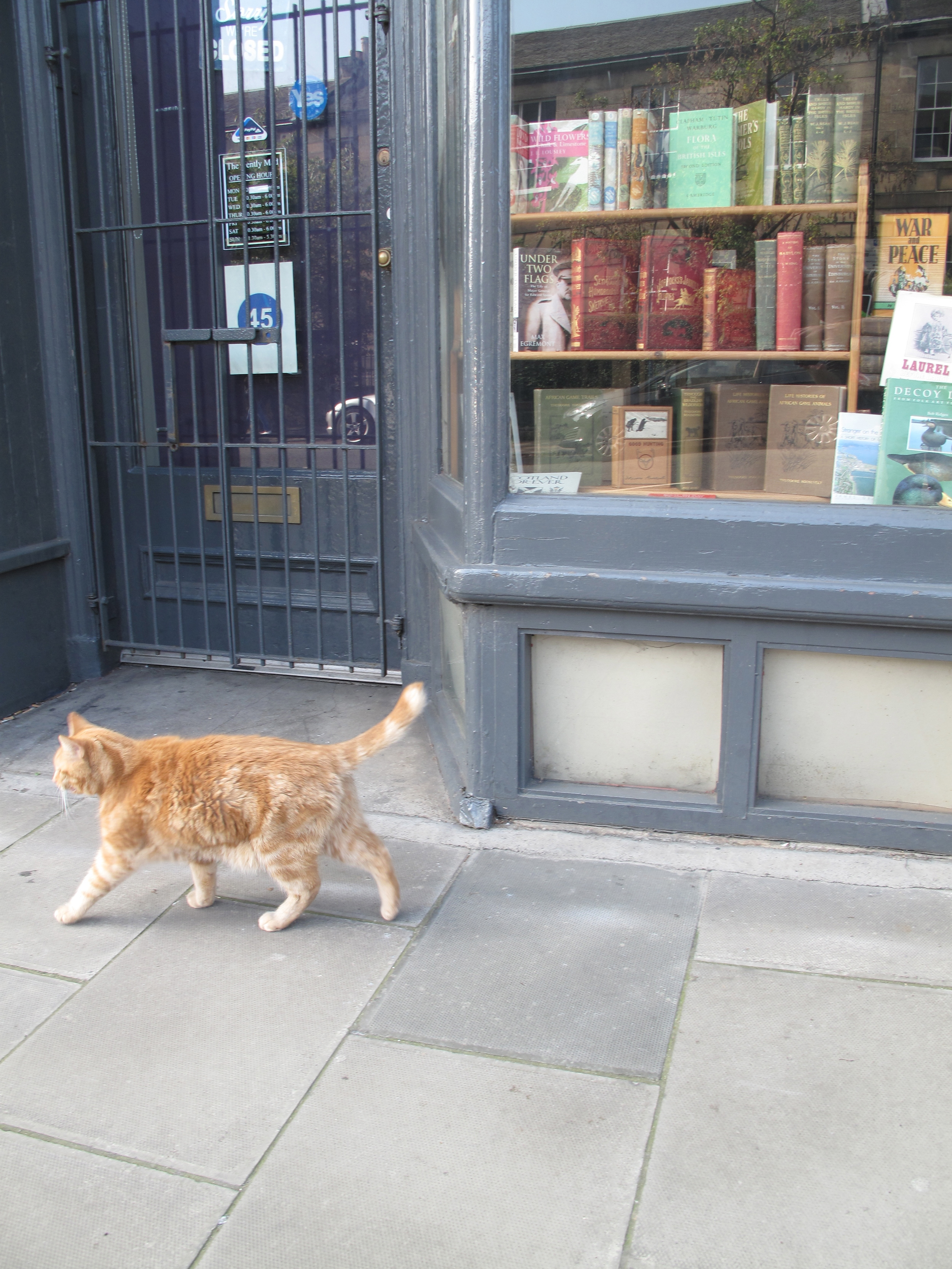 Tabby cat by a bookshop on the streets of Edinburgh.