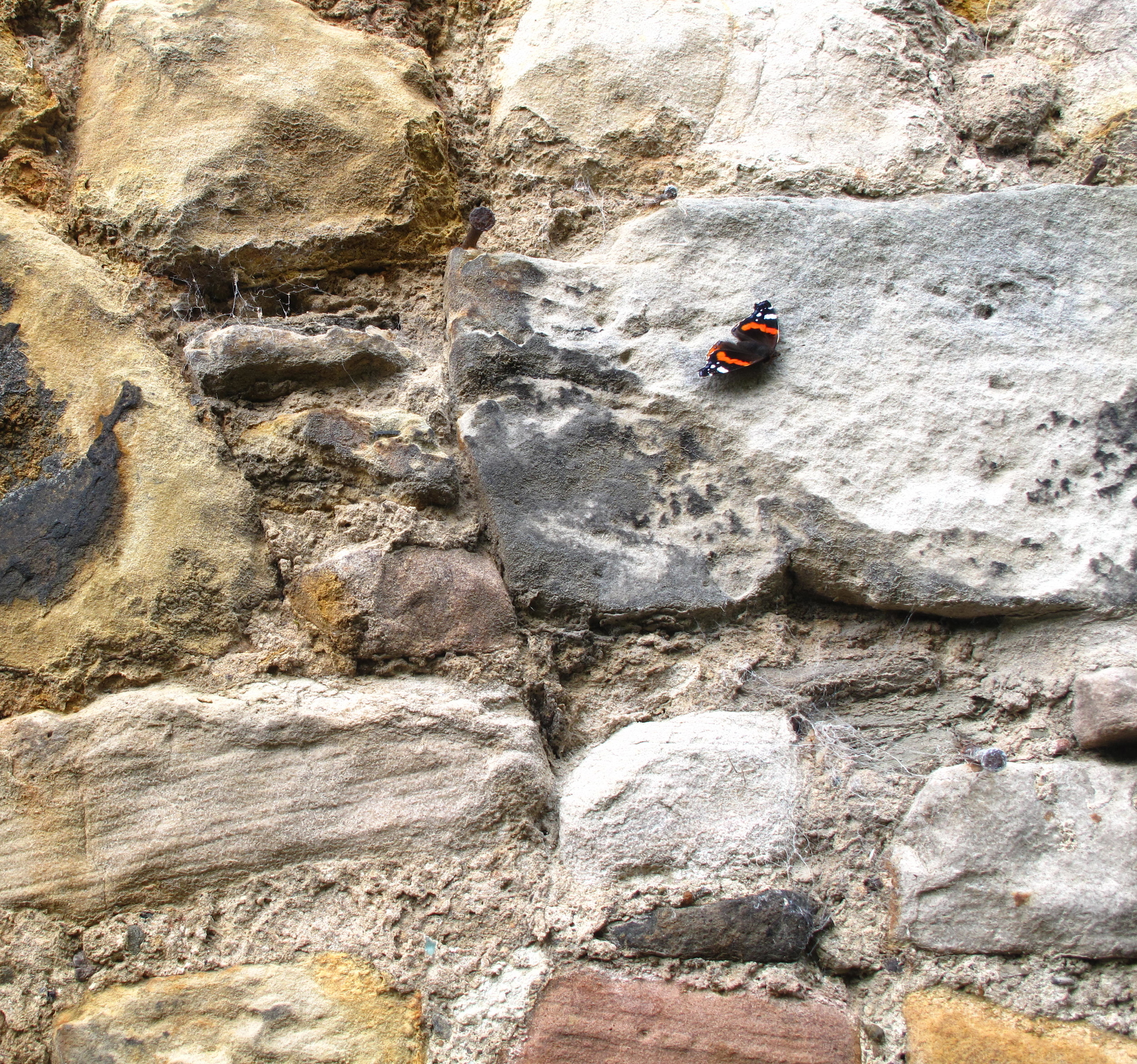 Butterfly on a stone wall, in the secret garden of Dr. Neil.