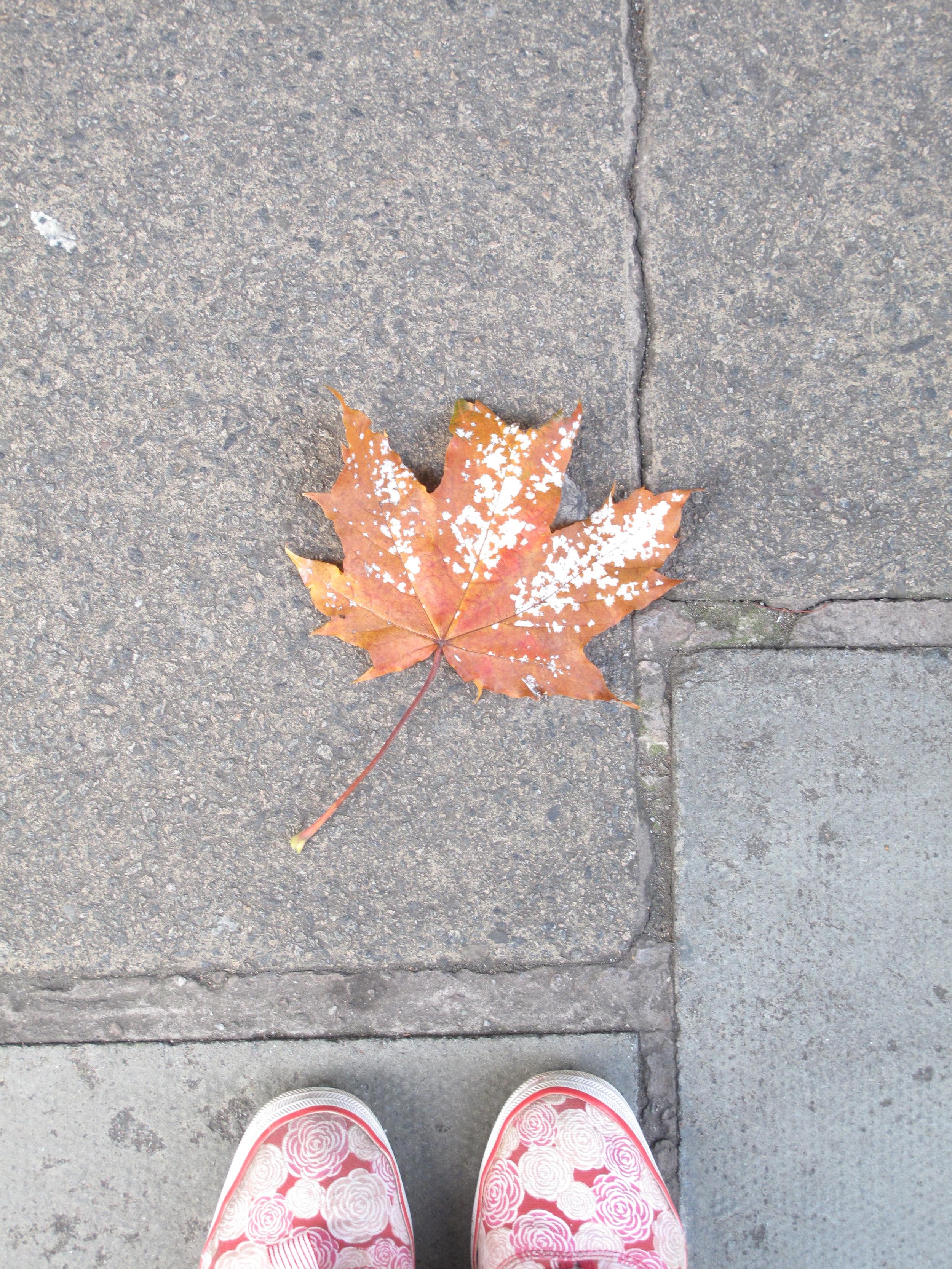 Autumn leaf on the stone pavement in Edinburgh