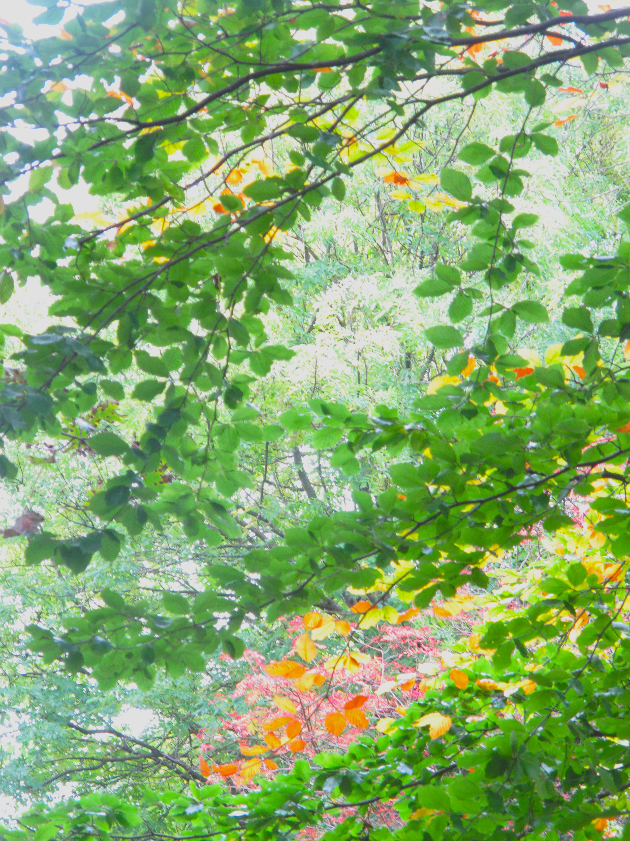 Autumn leaves - green, yellow and red.