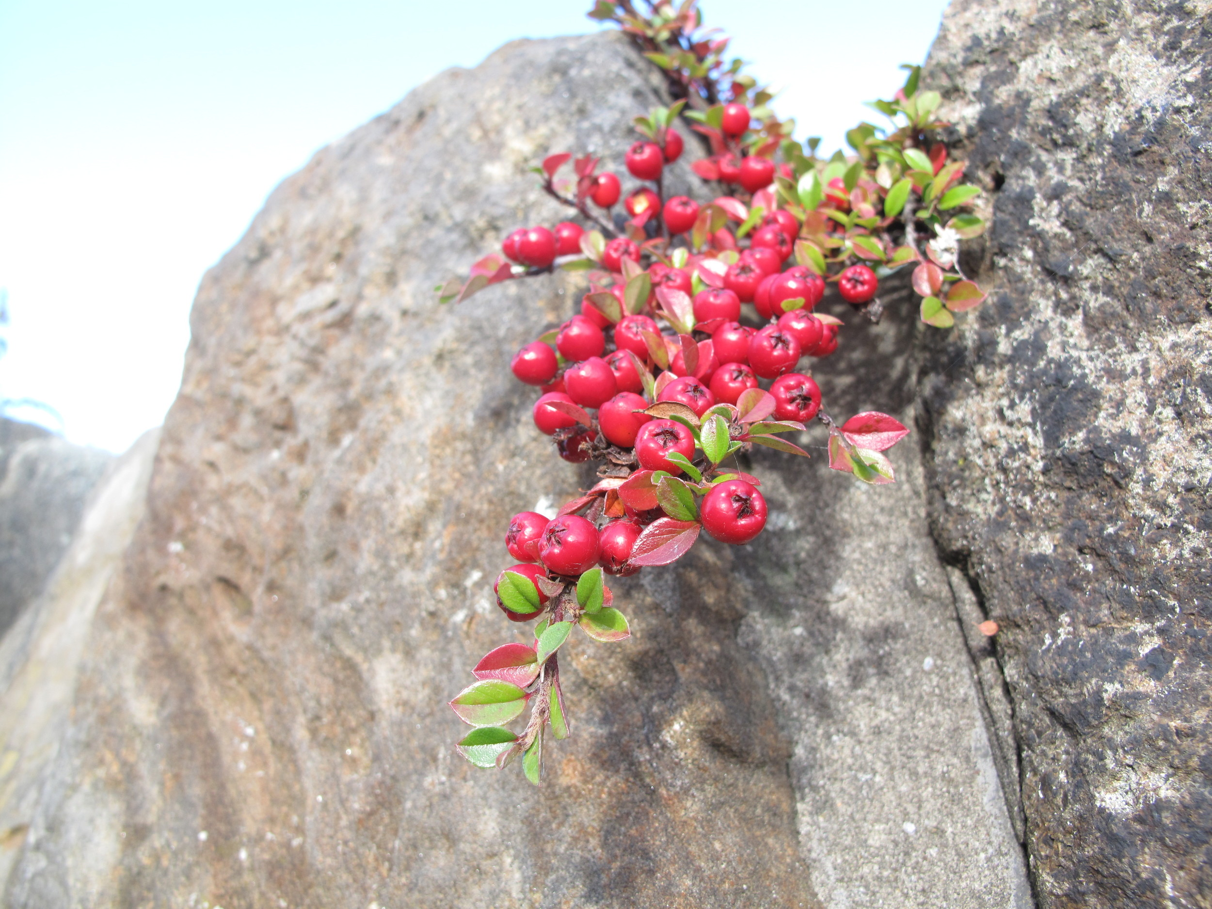 Red berries and rocks.