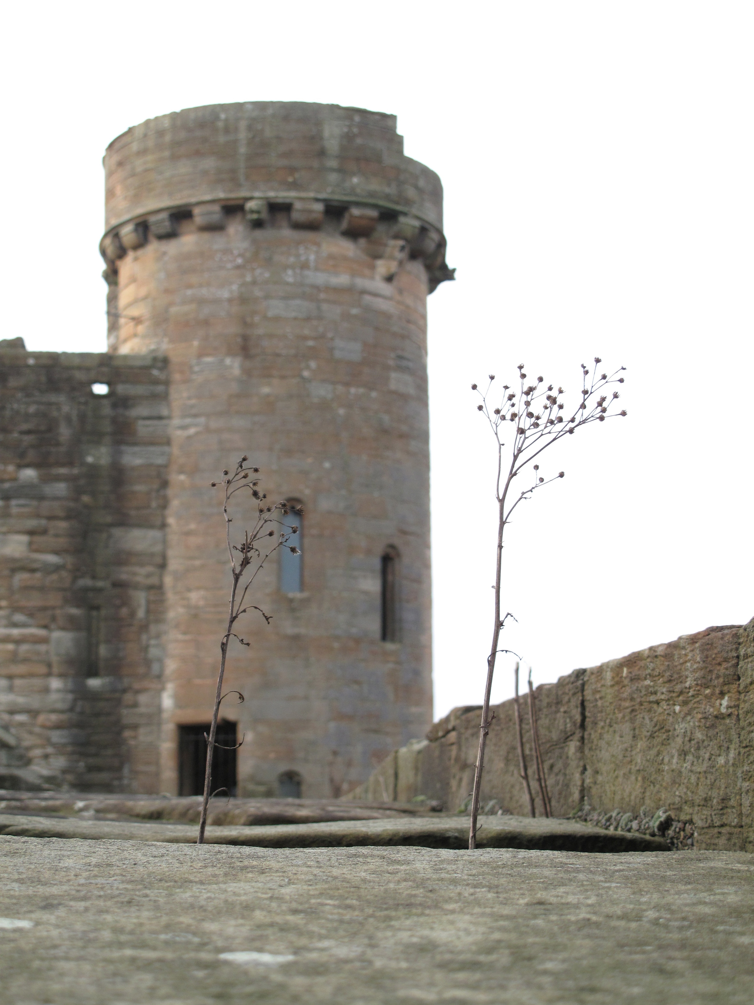 Linlithgow Palace circular tower on outer wall.