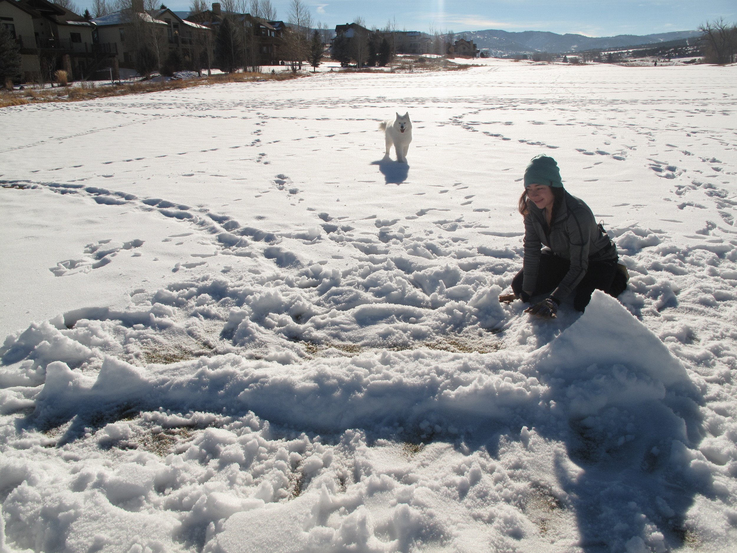 Making a deranged mutant killer snow shark with Brenda.
