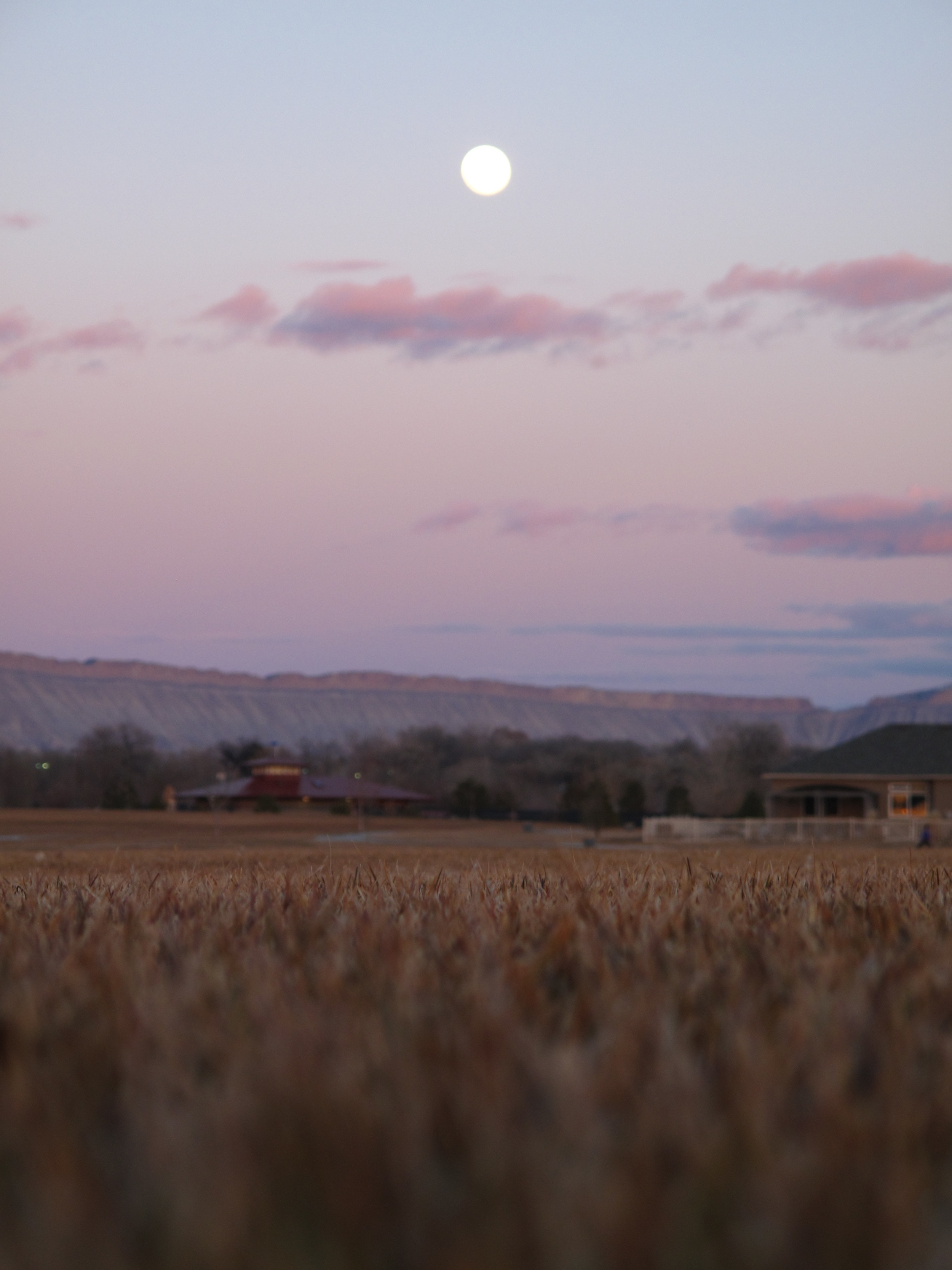 Full moon and purple sunset in Grand Junction, Colorado.