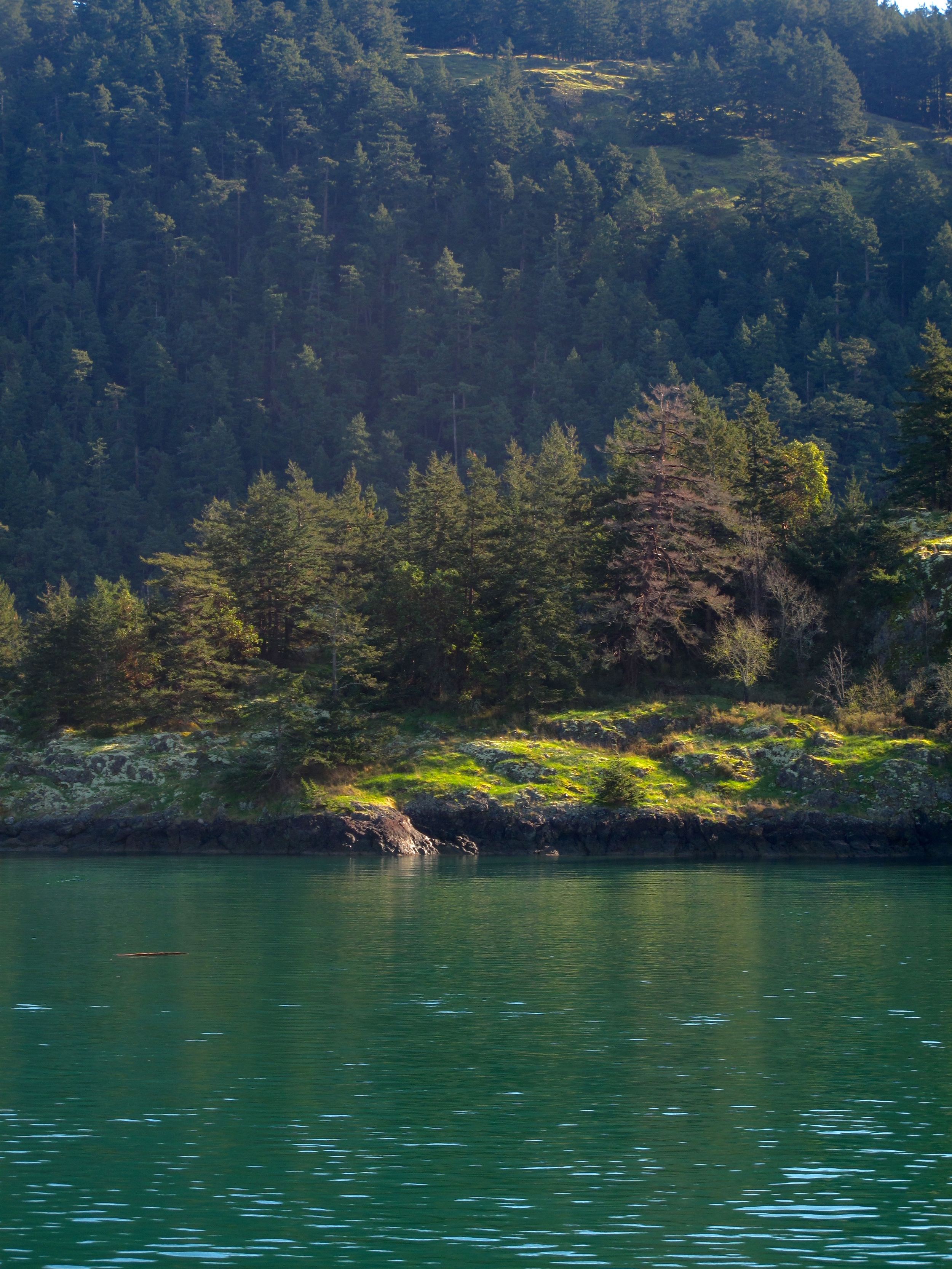 Beautiful green and lush alpine islands in the San Juan area.