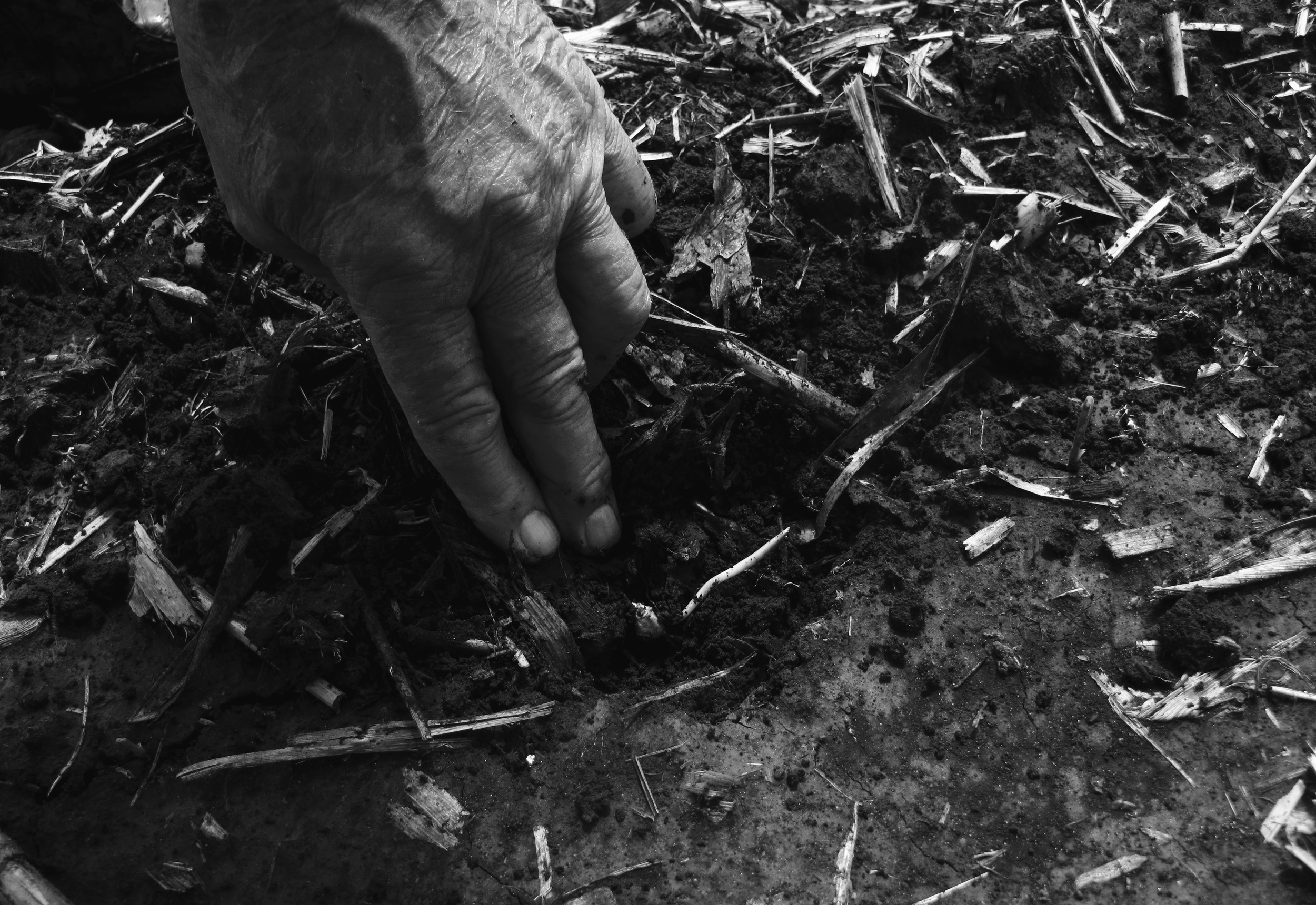 Uncle Herb checking for corn seedlings sprouting in the ground, Illinois.