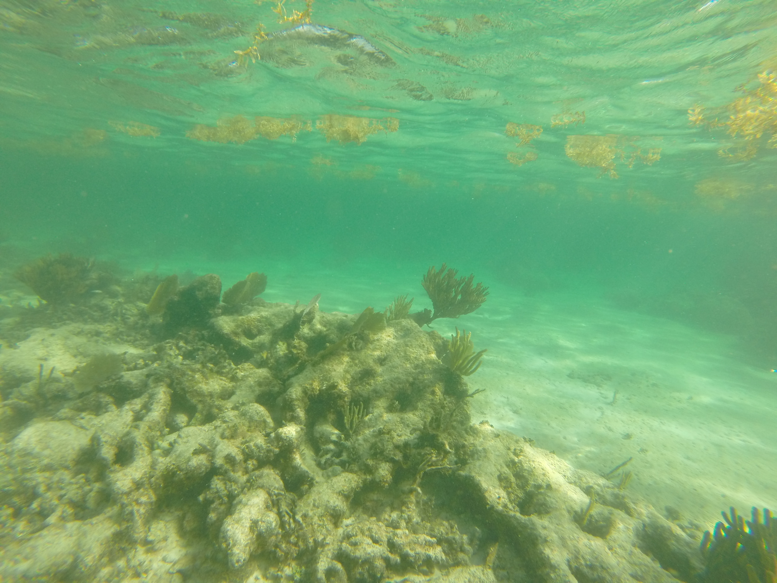 Underwater photo of a reef in Akumal, Mexico.
