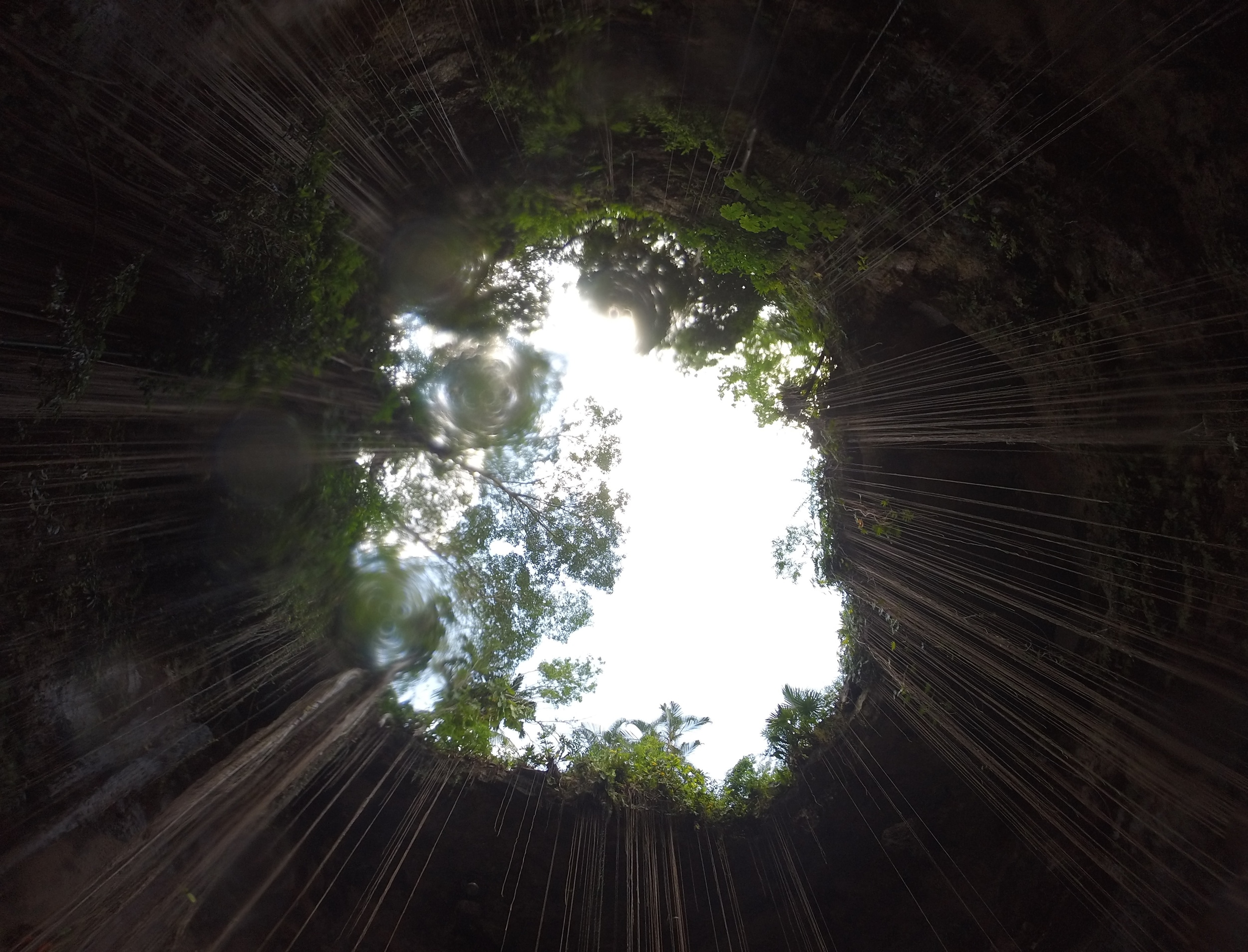 Looking up at the opening of Ik Kil cenote, with vines and cave roof.