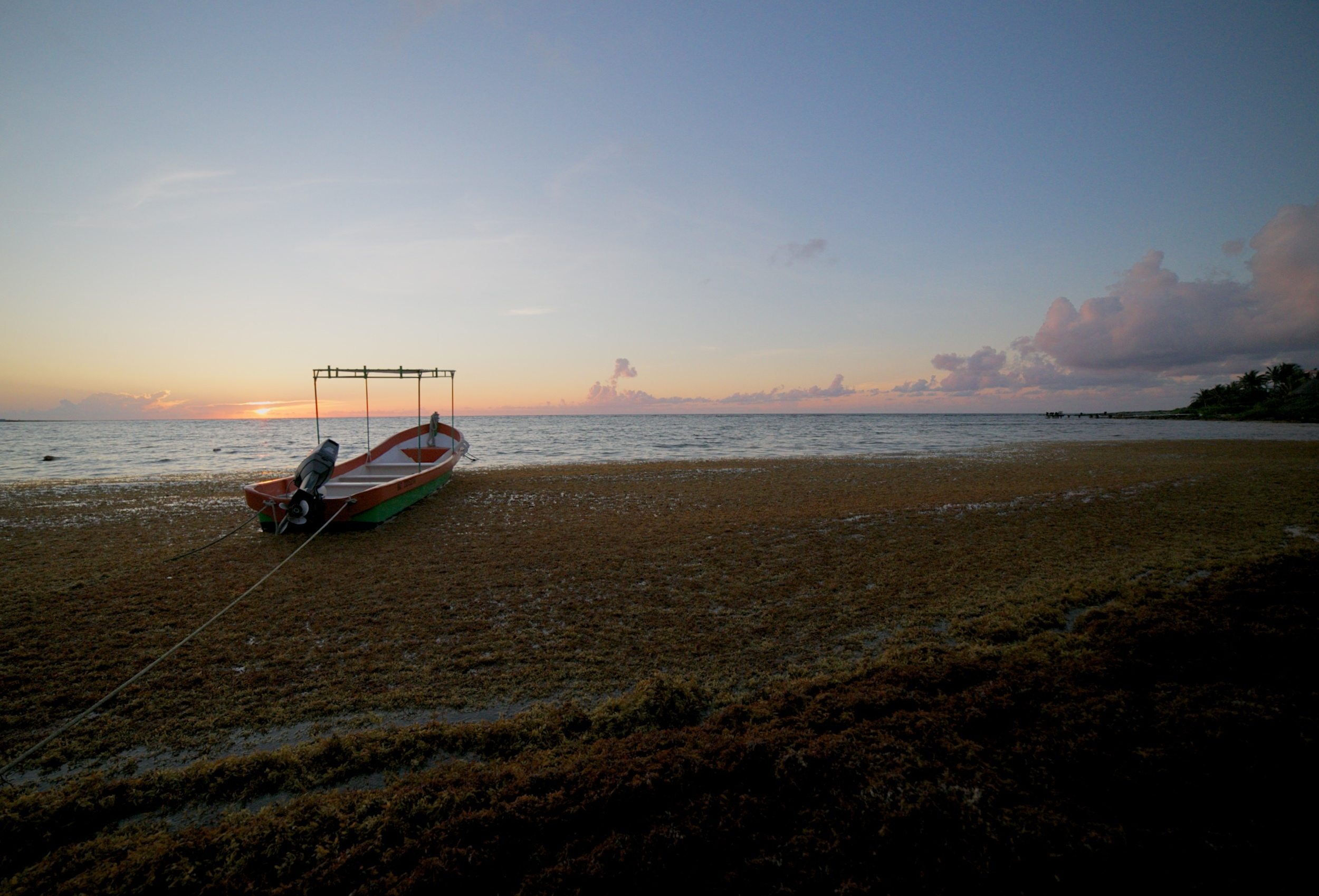 A small fishing boat resting in seaweed at sunrise in Mexico.