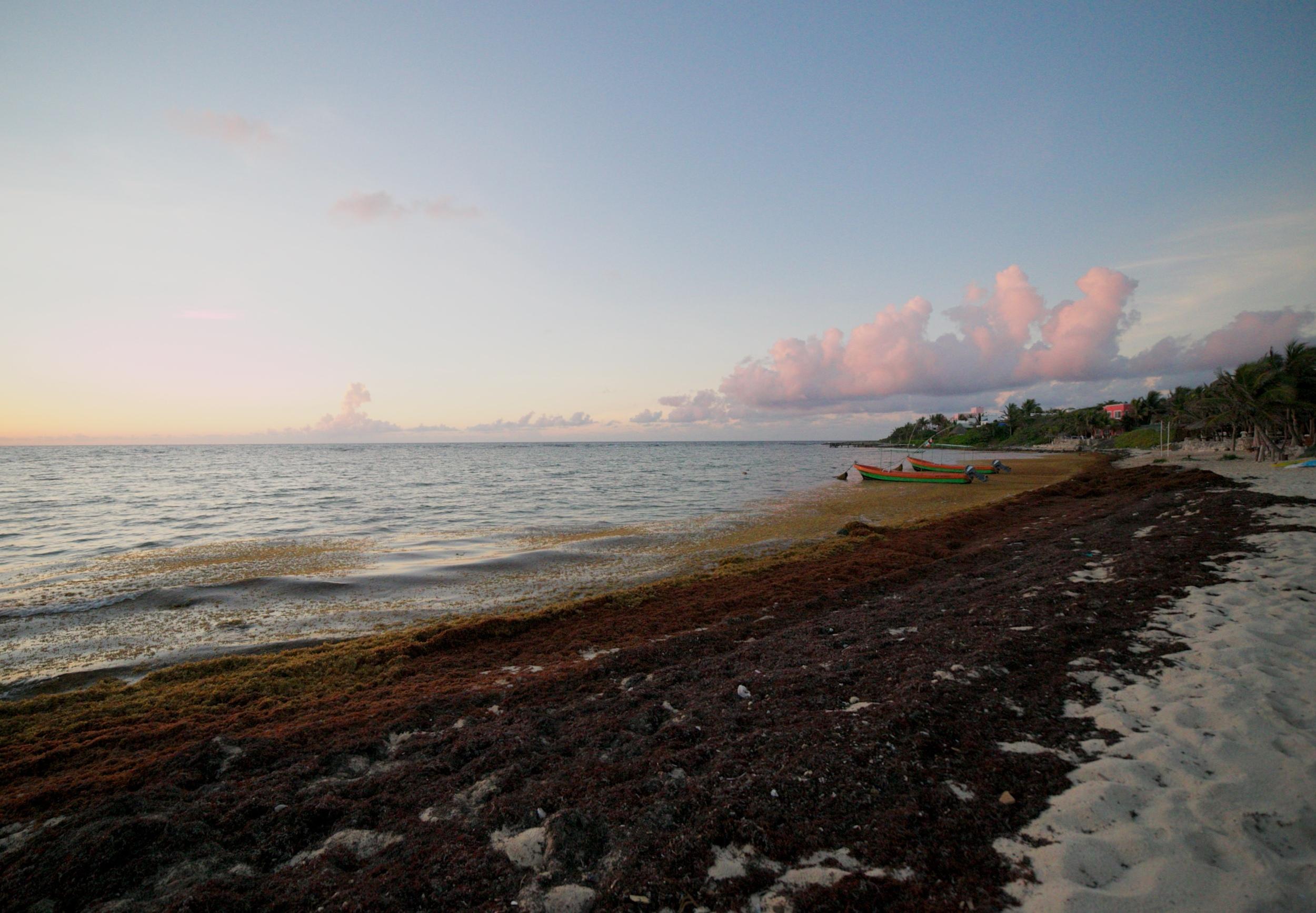Swathes of red seaweed and a rising sun, Half Moon Bay, Akumal.