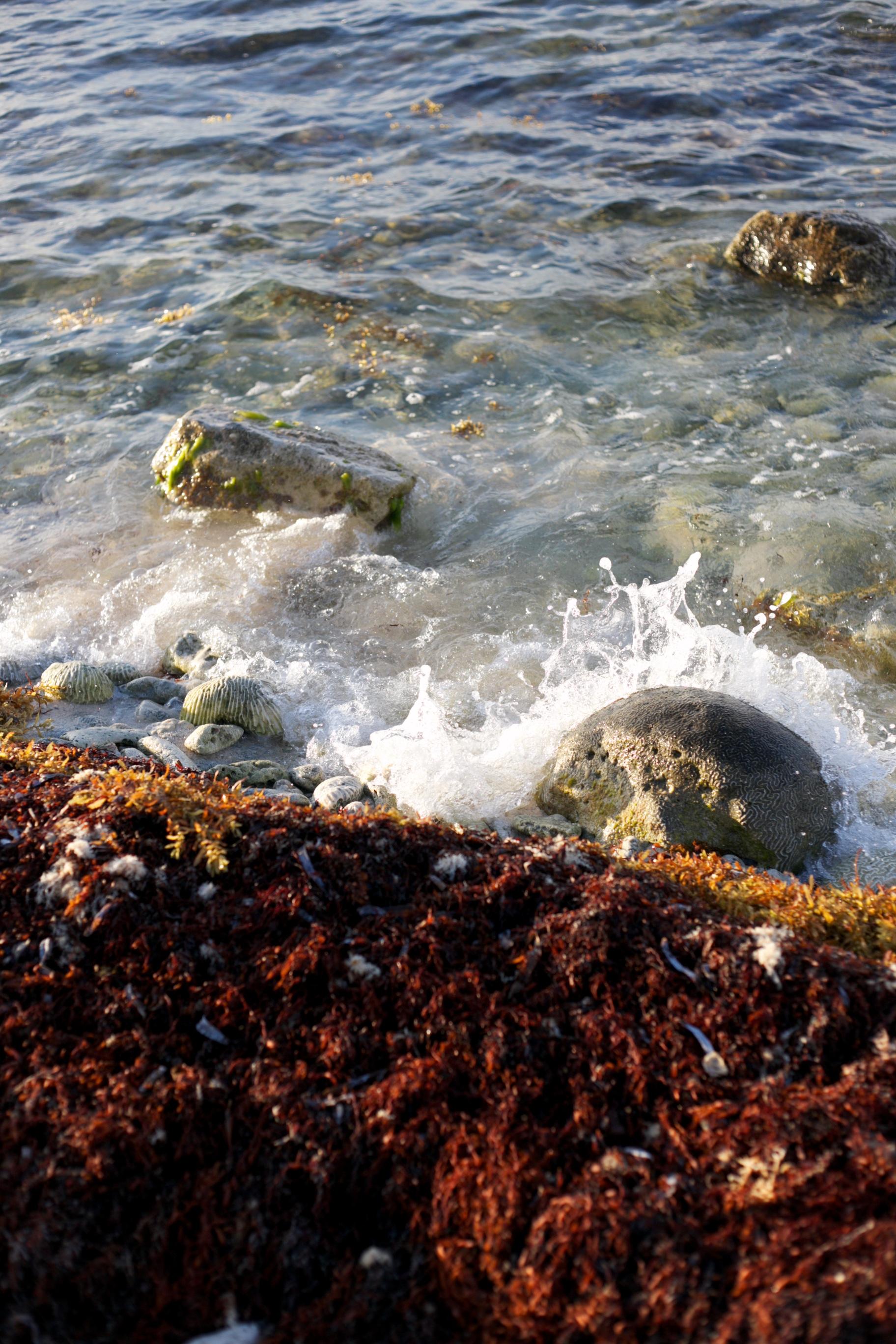 Sea water and seaweed splashing on the rocks.