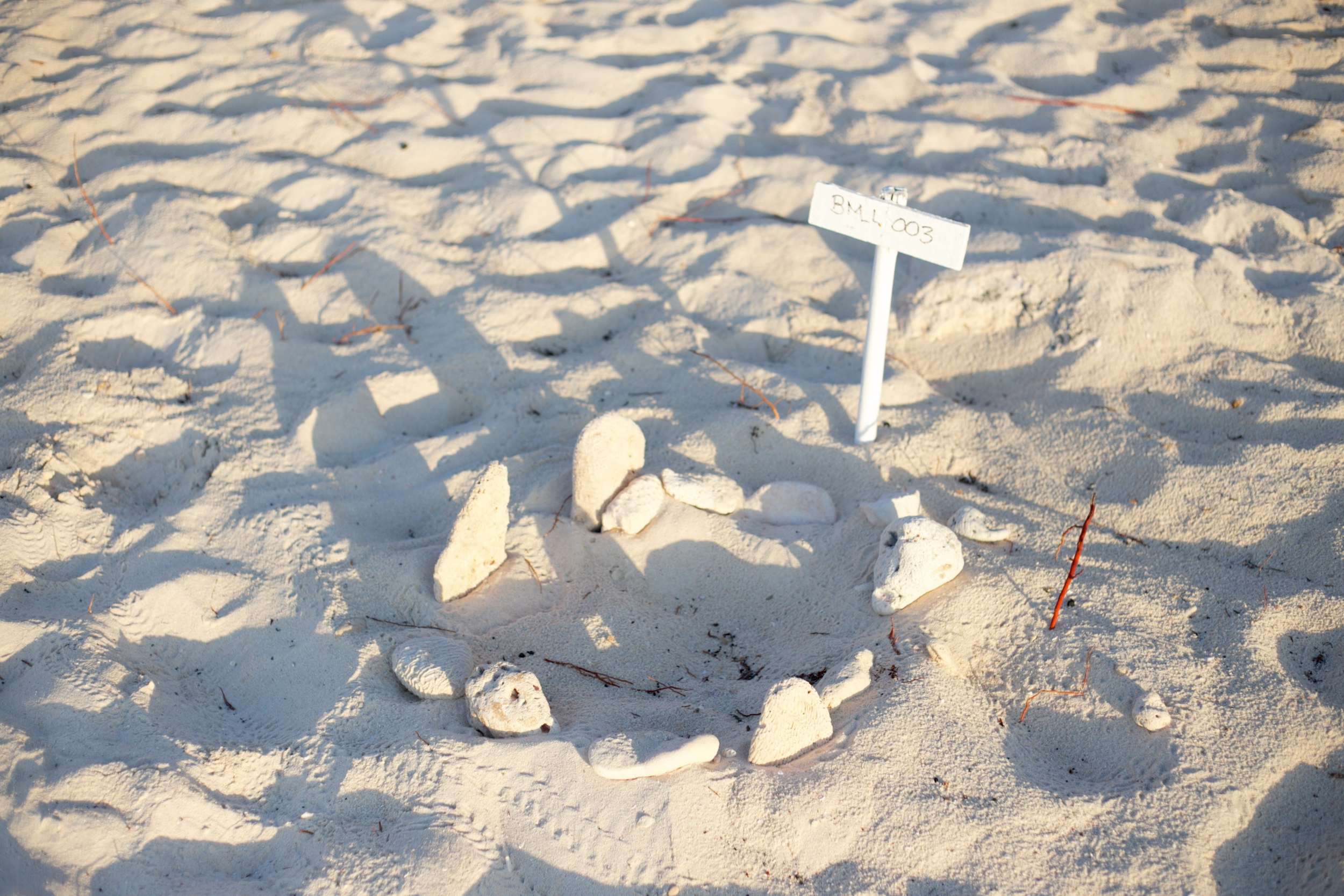 A marked turtle's nest in Half Moon Bay.