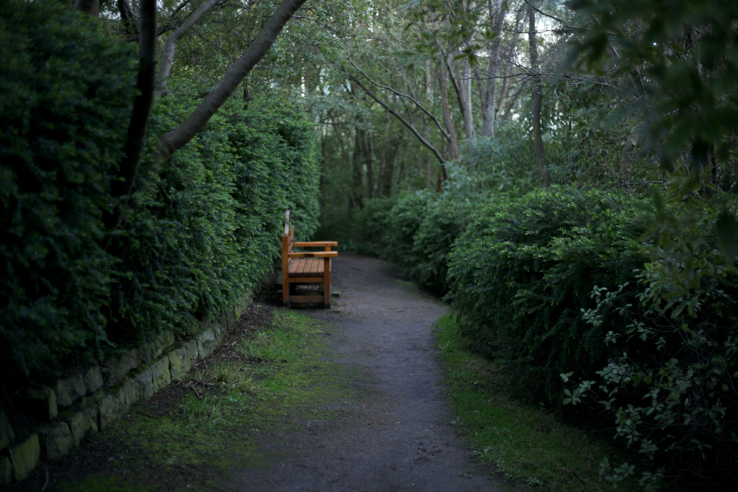 Secret places Dunedin! - A bench by the river at the University of Otago.