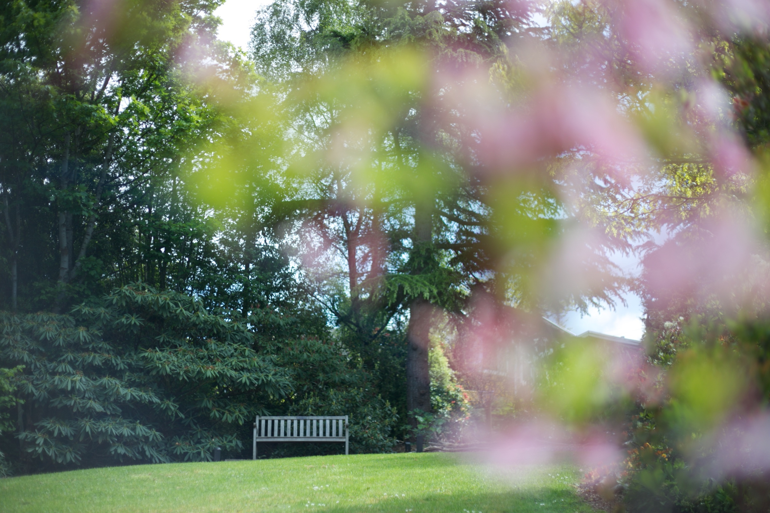 A park bench seen behind blossoms, Tannock Glen in spring.