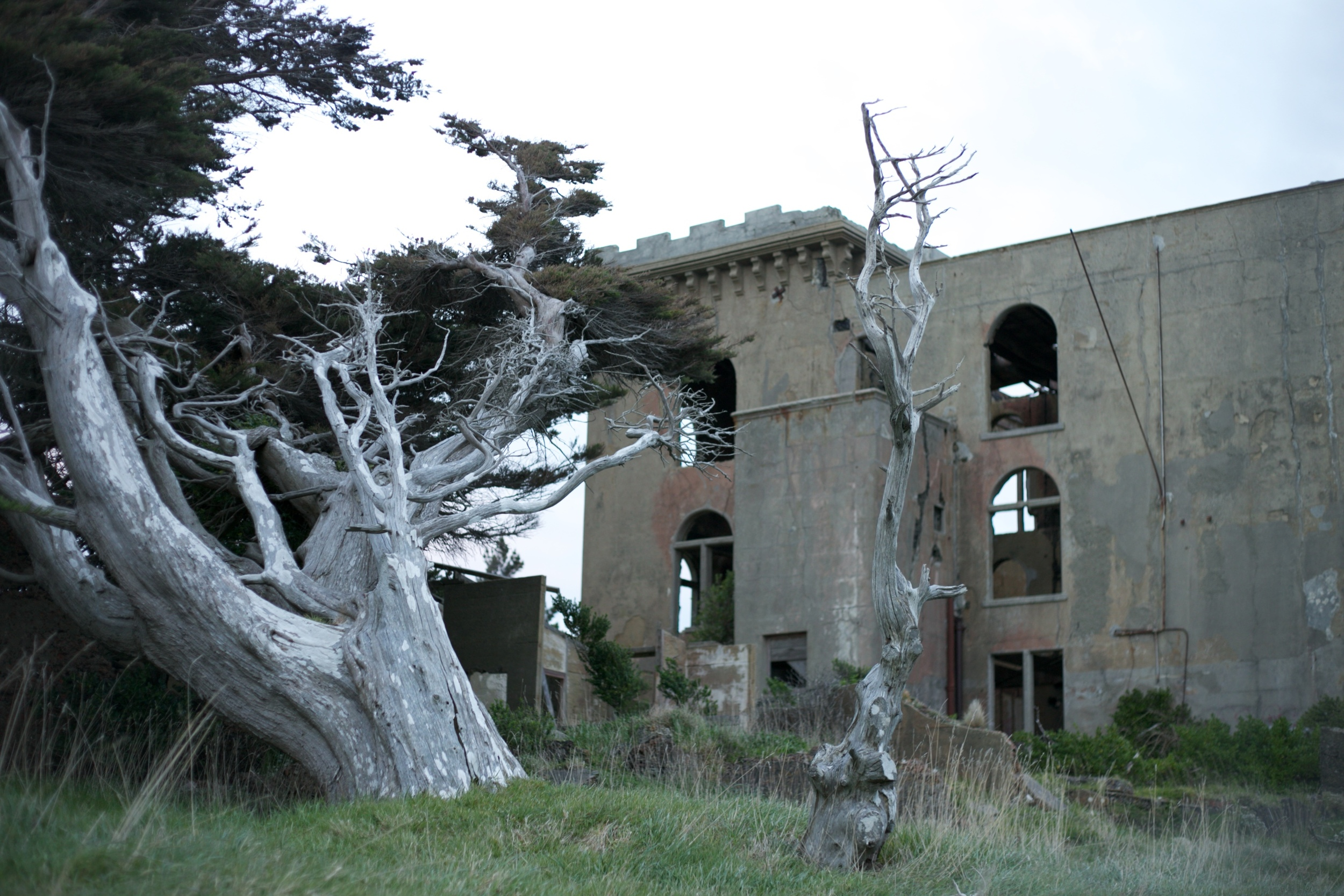 Twisted trees and an abandoned NZ castle.