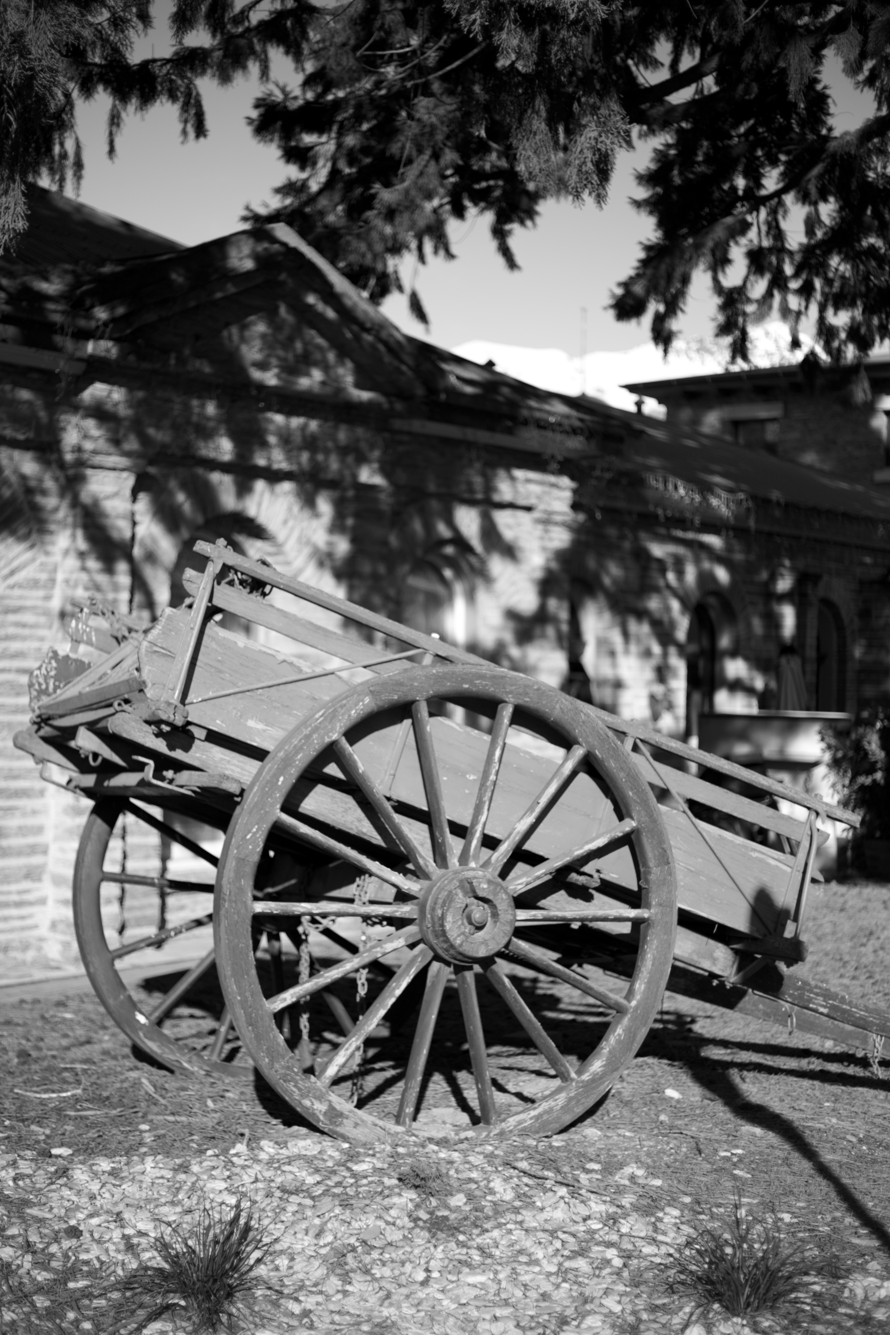 Wagon cart under pine trees.