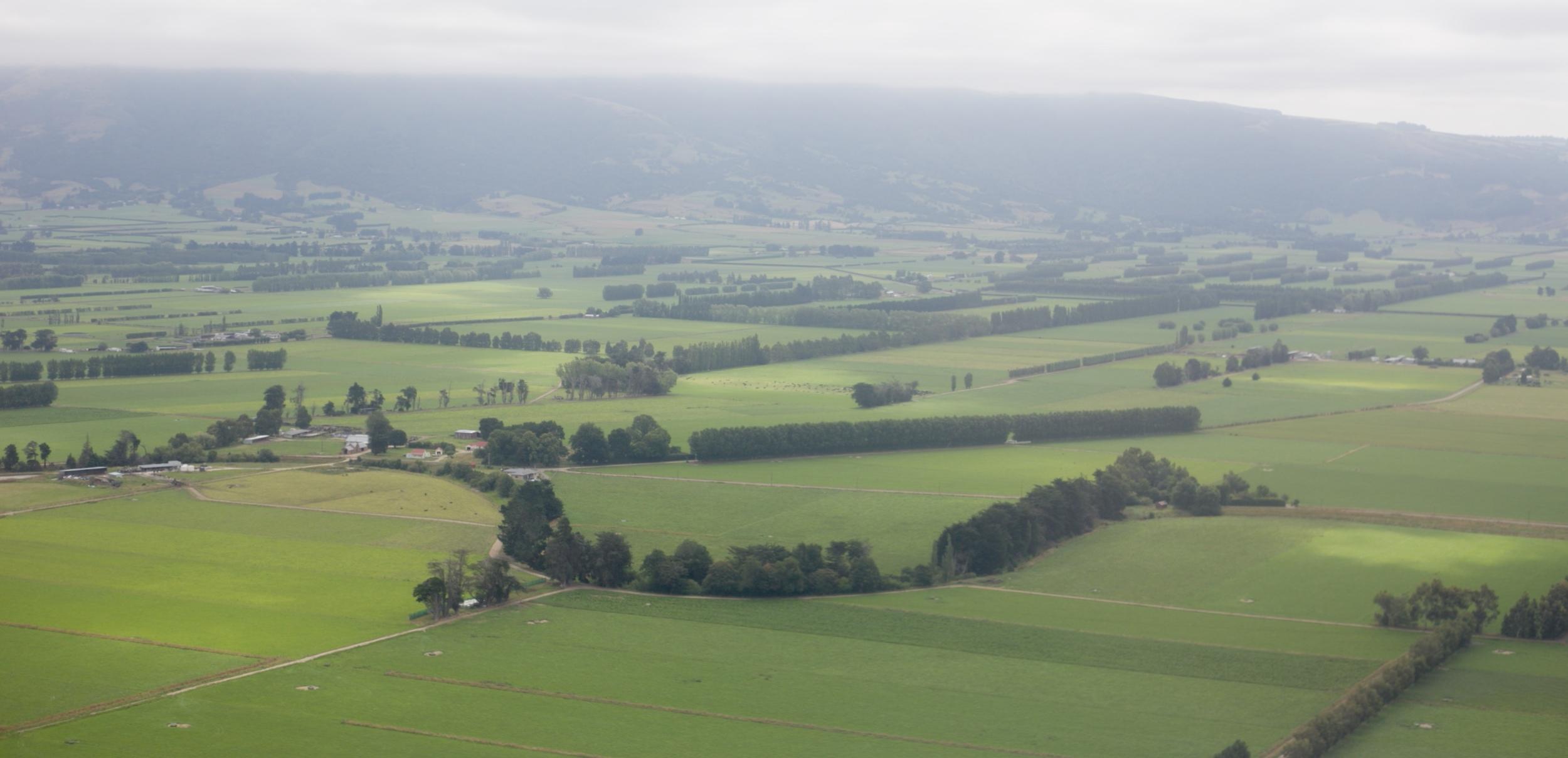 Green pastures in New Zealand.