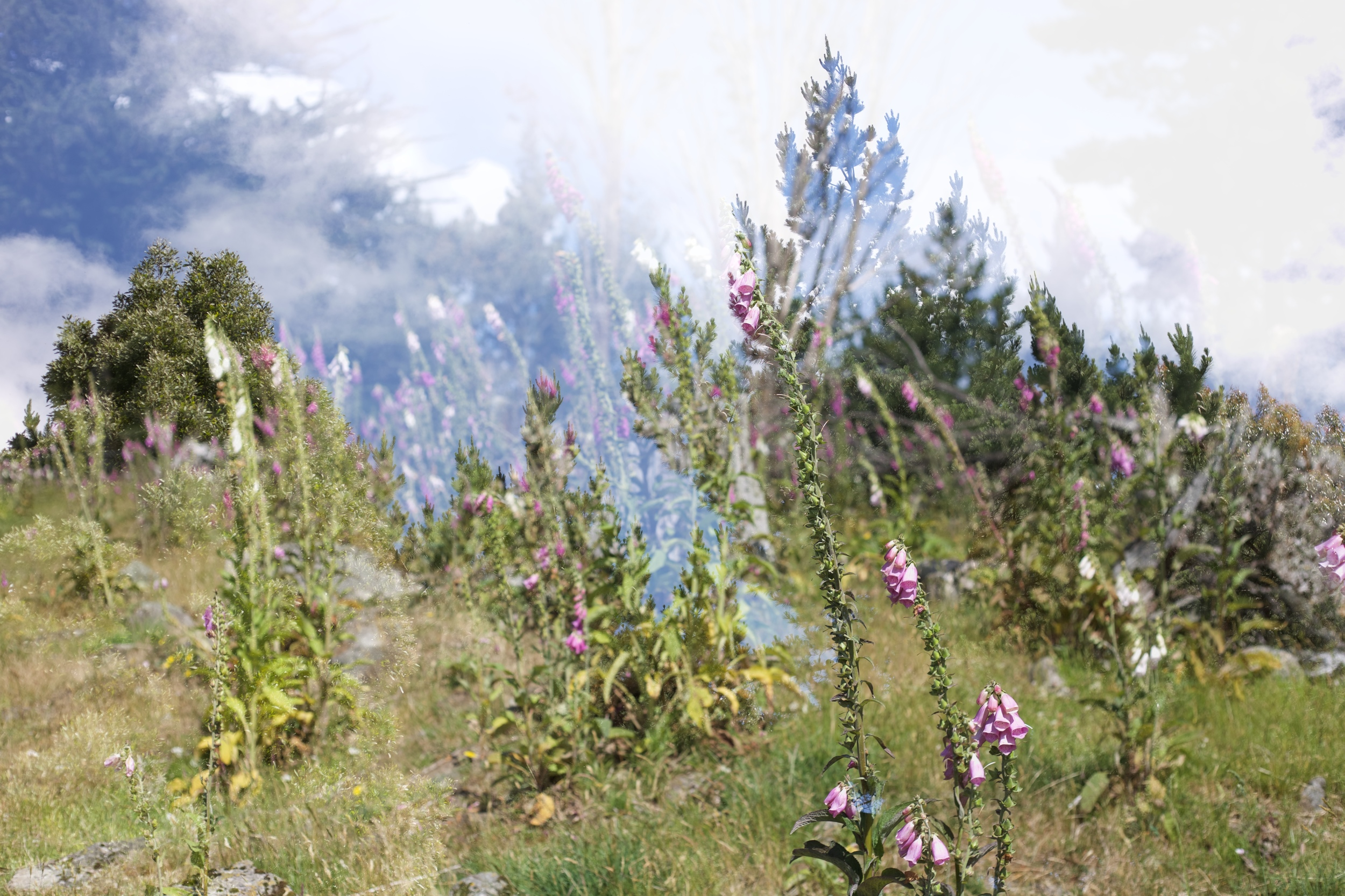Multiple exposures - flowers, trees and sky. Amazing spaces.