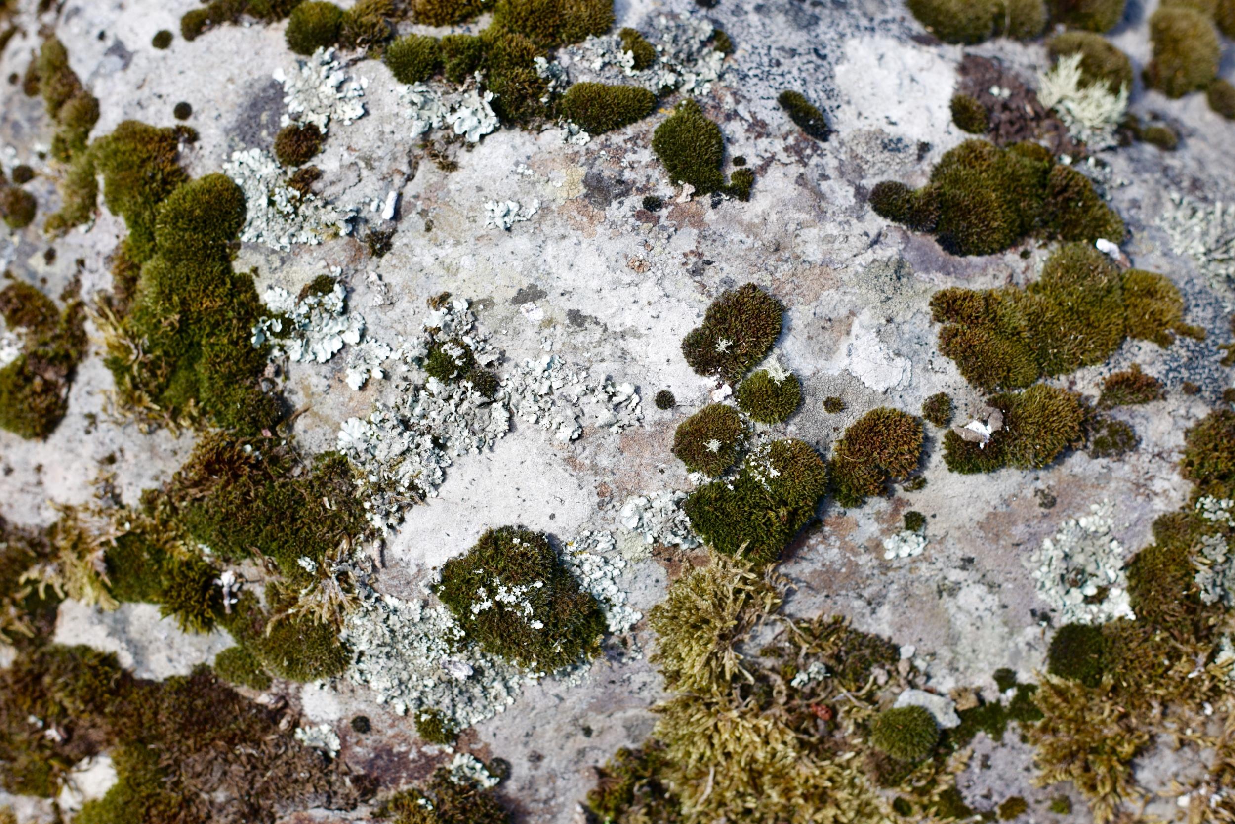 Moss growing on rocks in a fairy dell.