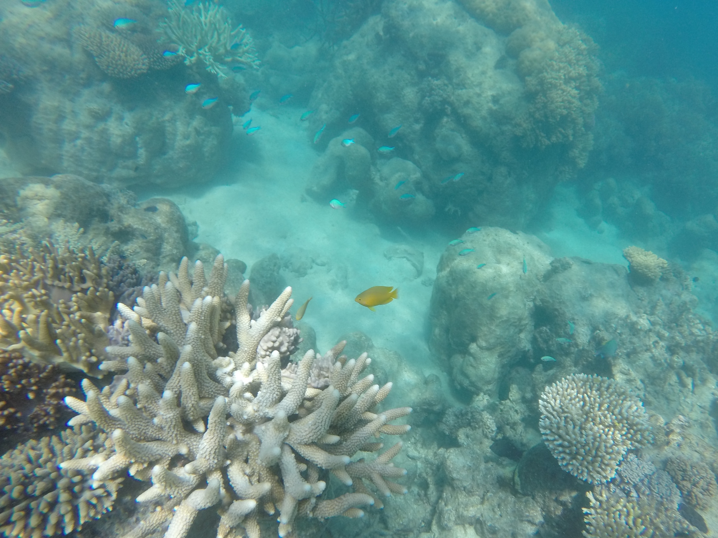 Corals and small fish on the reef.