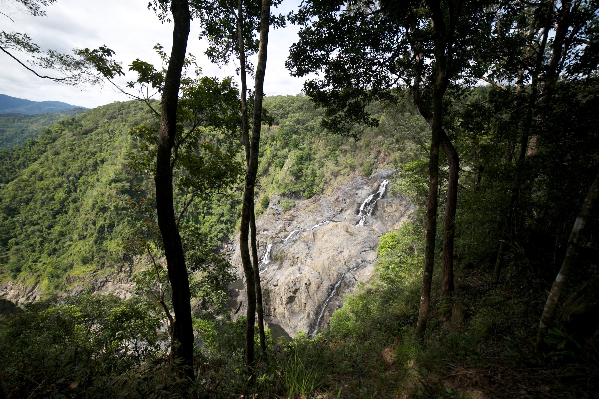 Barron Falls seen through the rainforest trees.