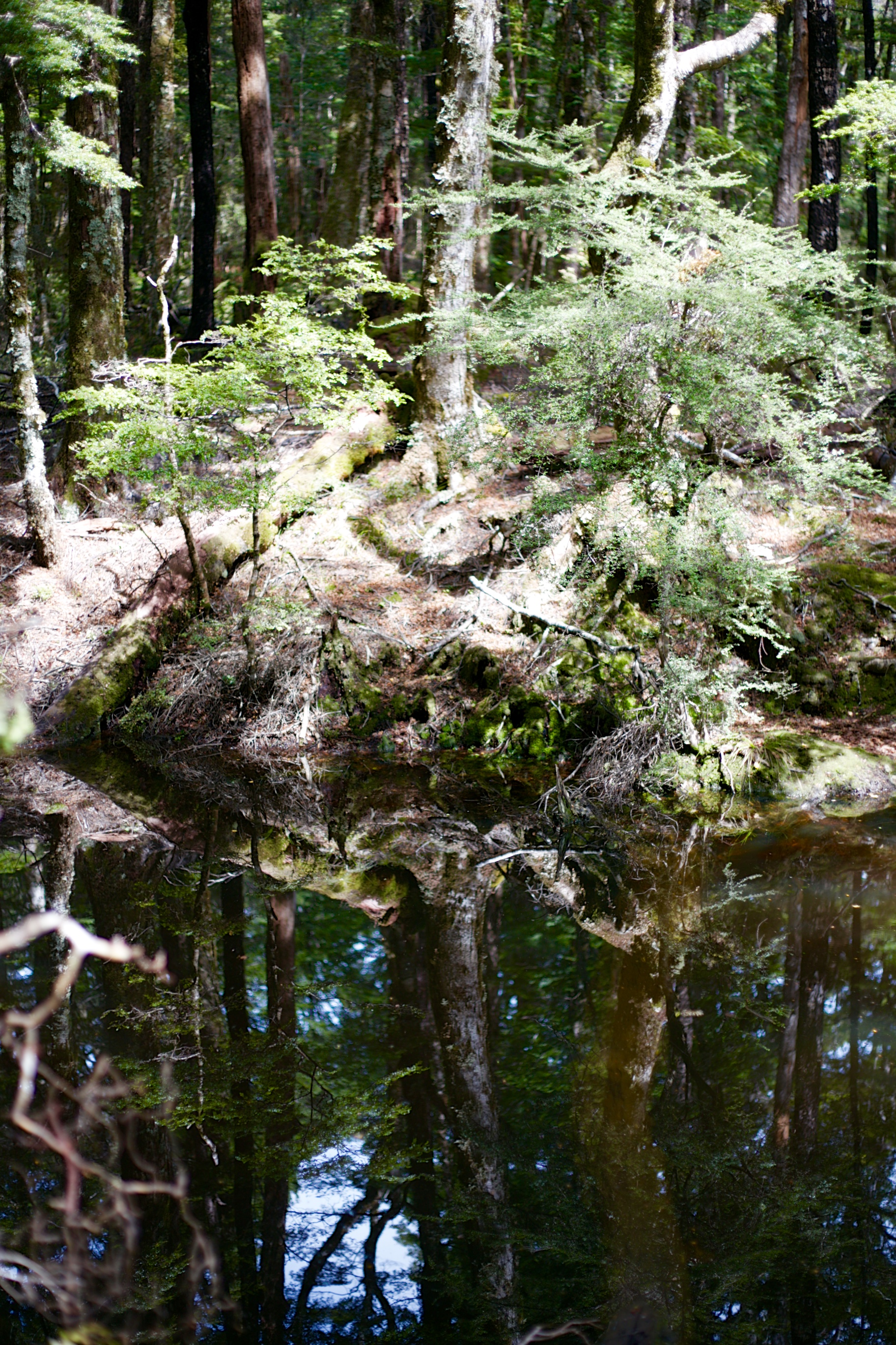 A tree trunk reflected in a mirror pool.