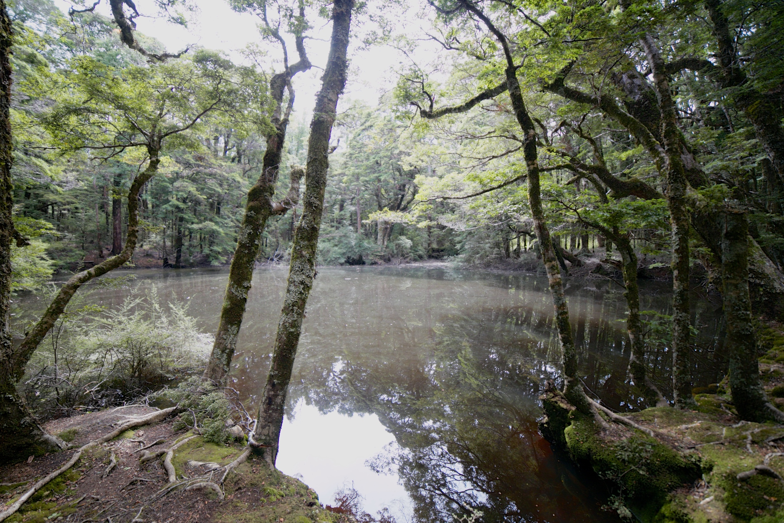 A mirror mere - a small enchanted pool in Caanan Downs forest.