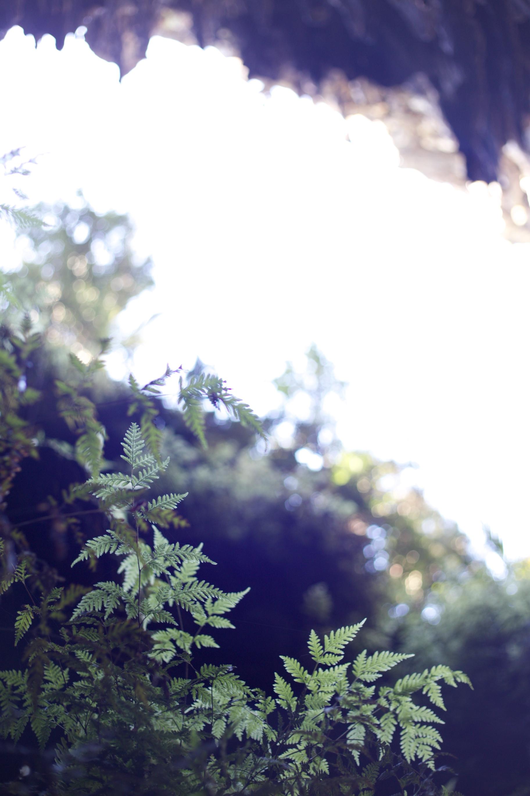 Delicate fern plants growing in Rawhiti Cave, NZ.