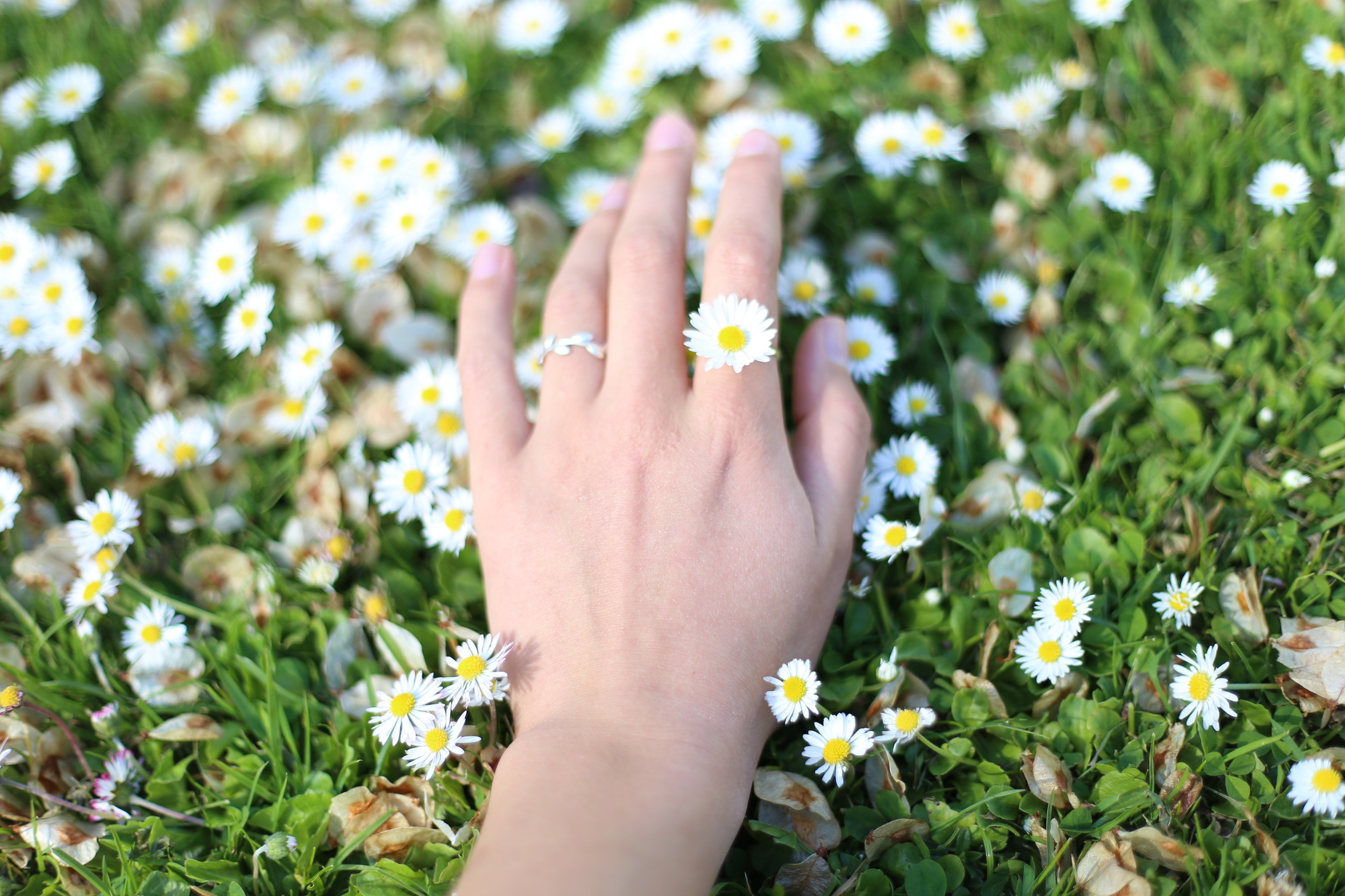 How to make a ring out of a real daisy.