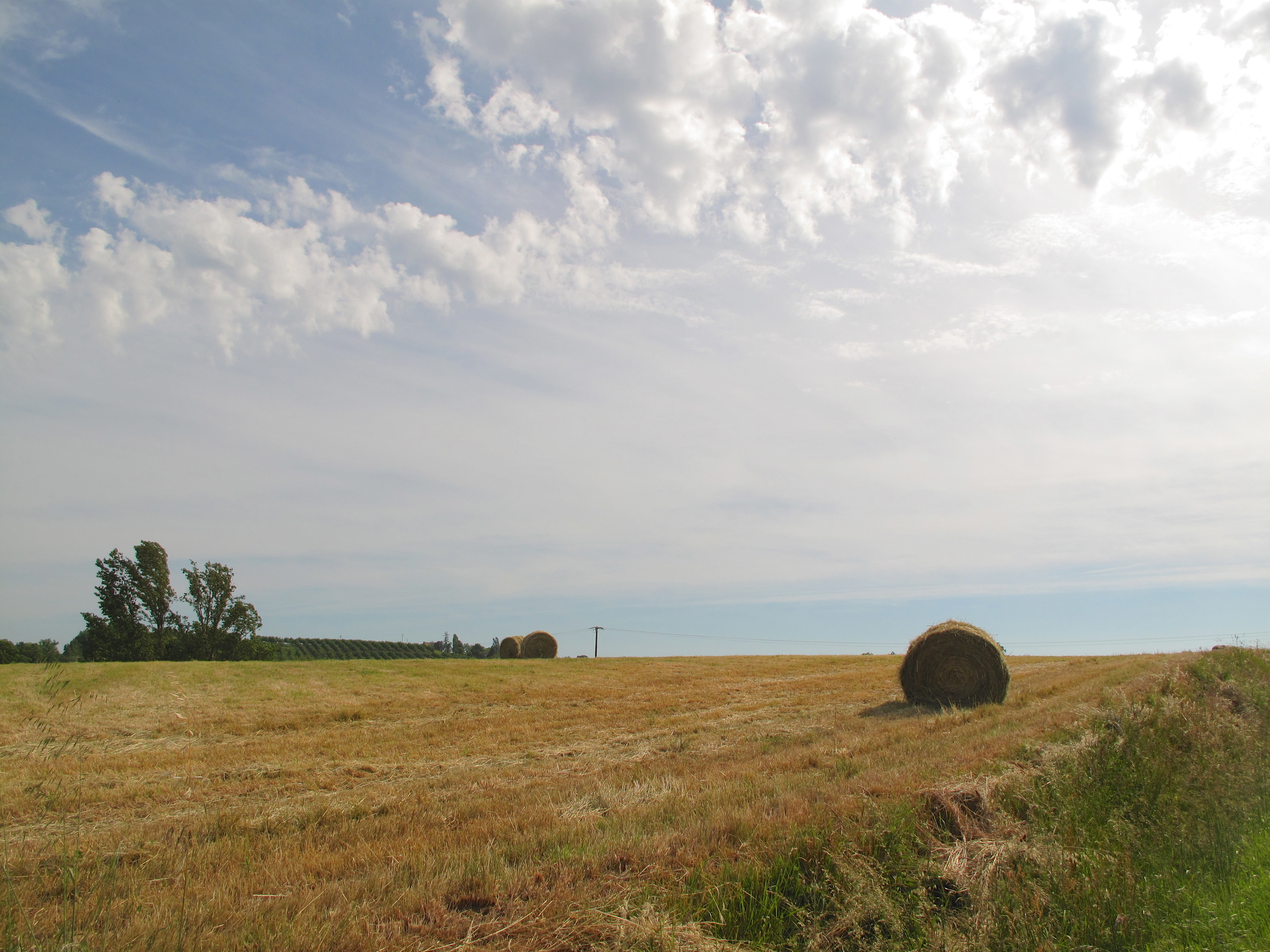 Hay bales in French wheat fields.