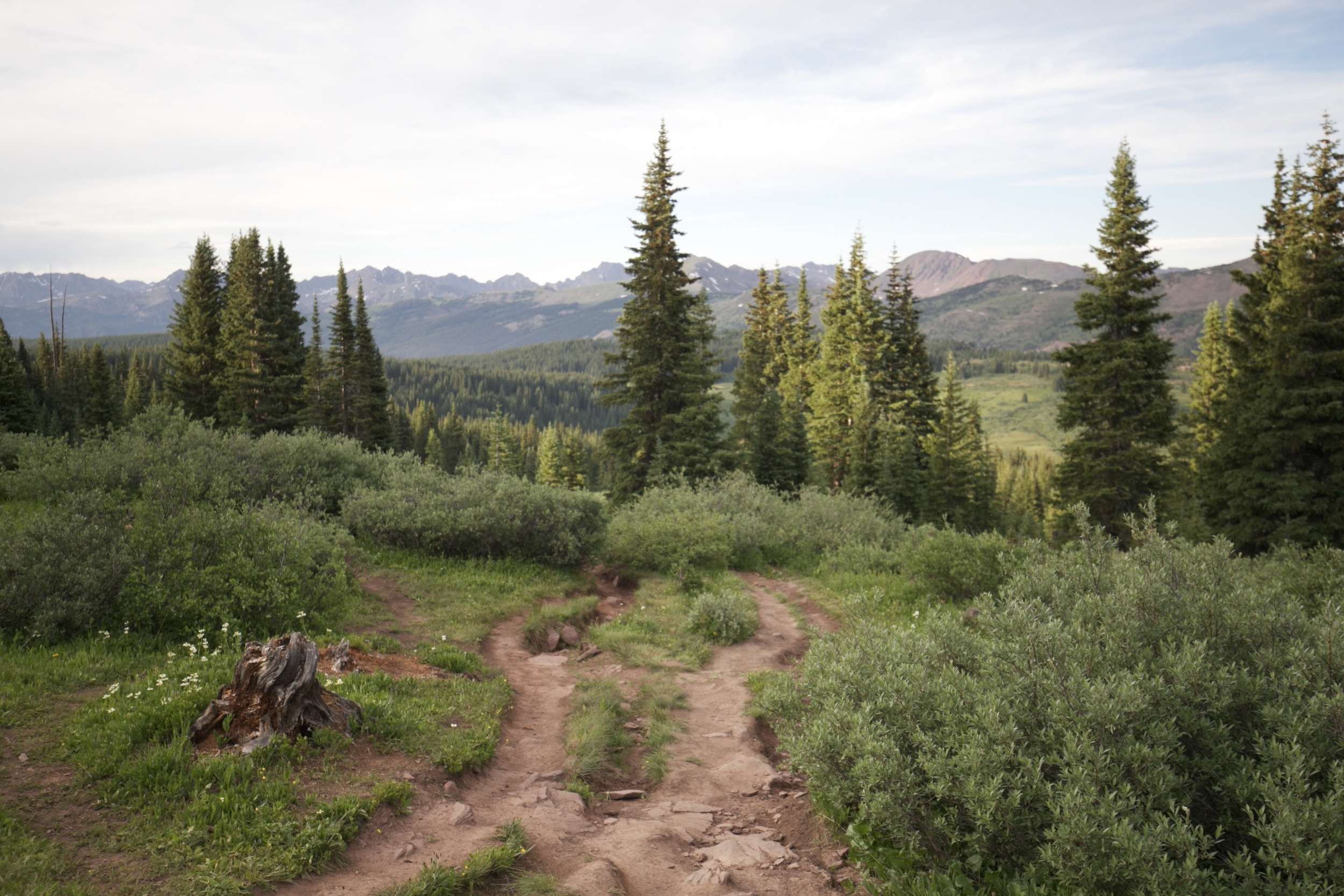 Shrine Pass trail in Spring.