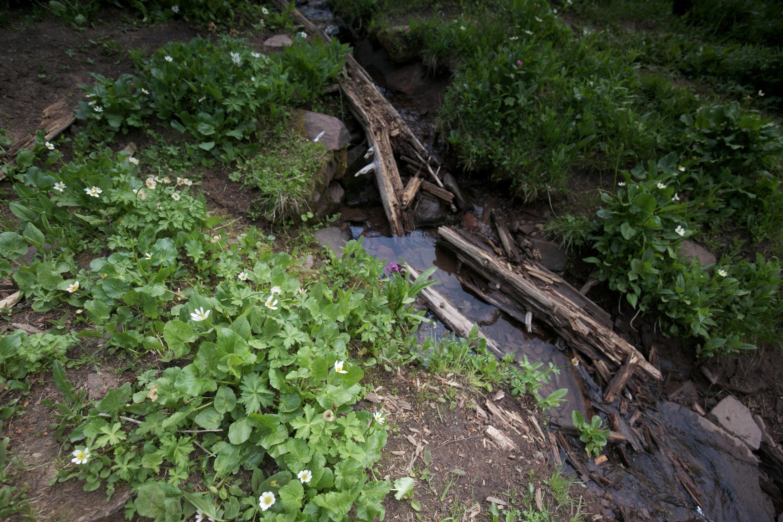Small stream and Marsh Marigolds, Shrine Pass.