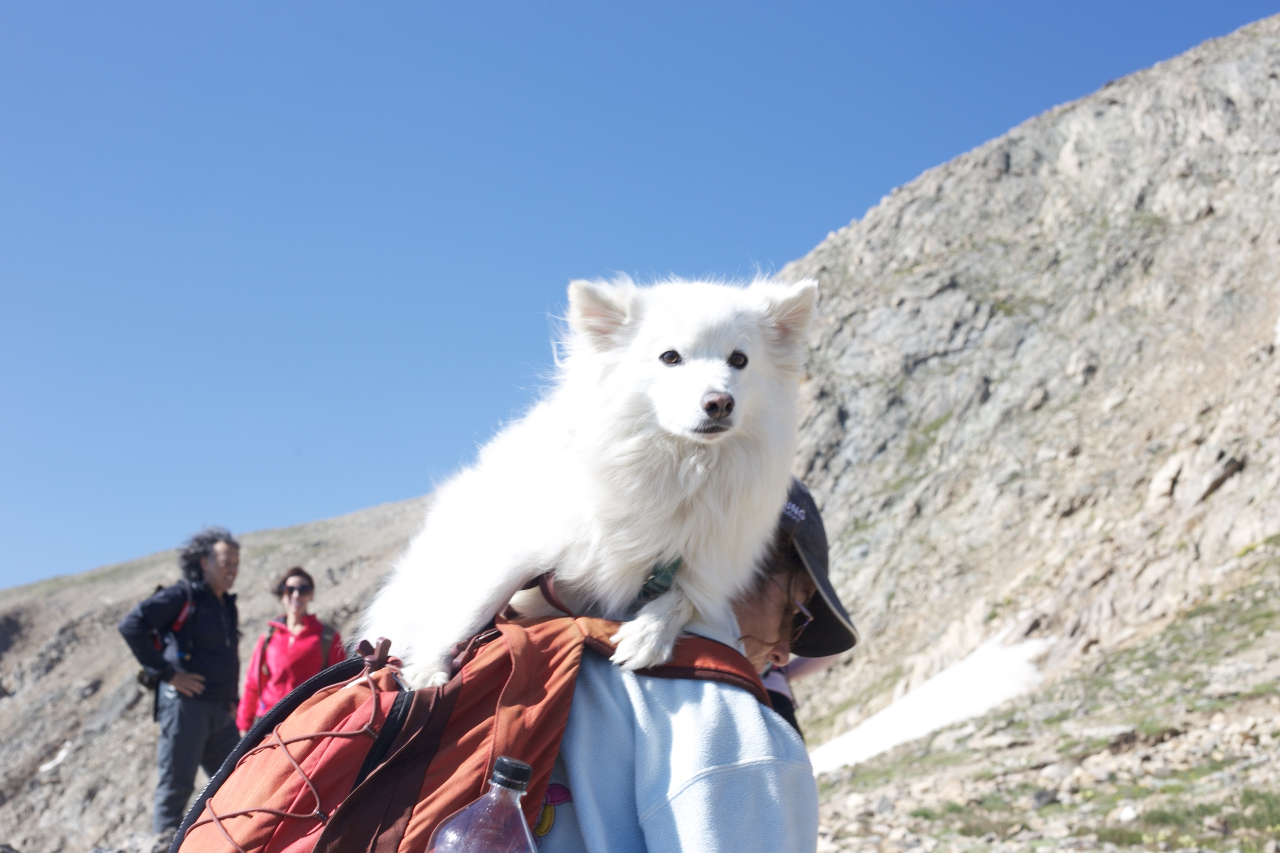 Dog riding on a ladie's backpack.