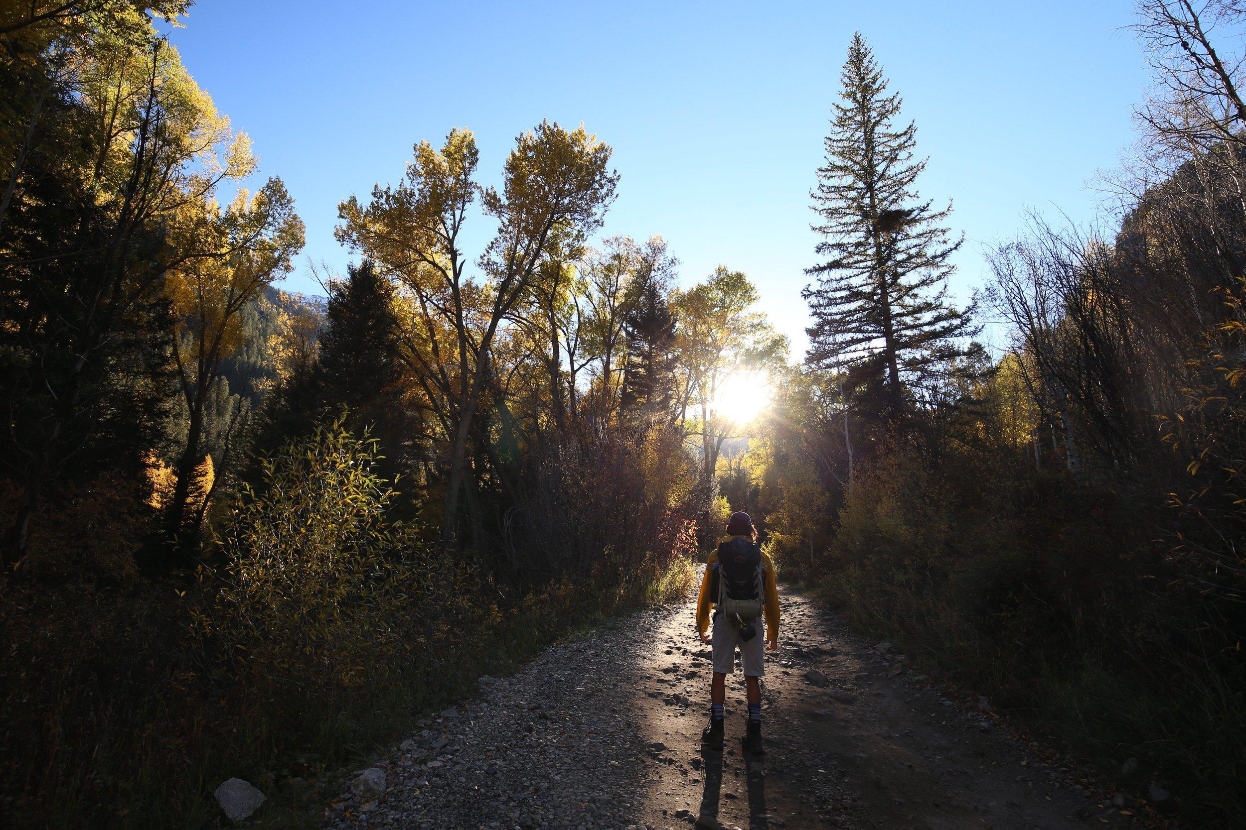 Exploring the aspen groves of Colorado.