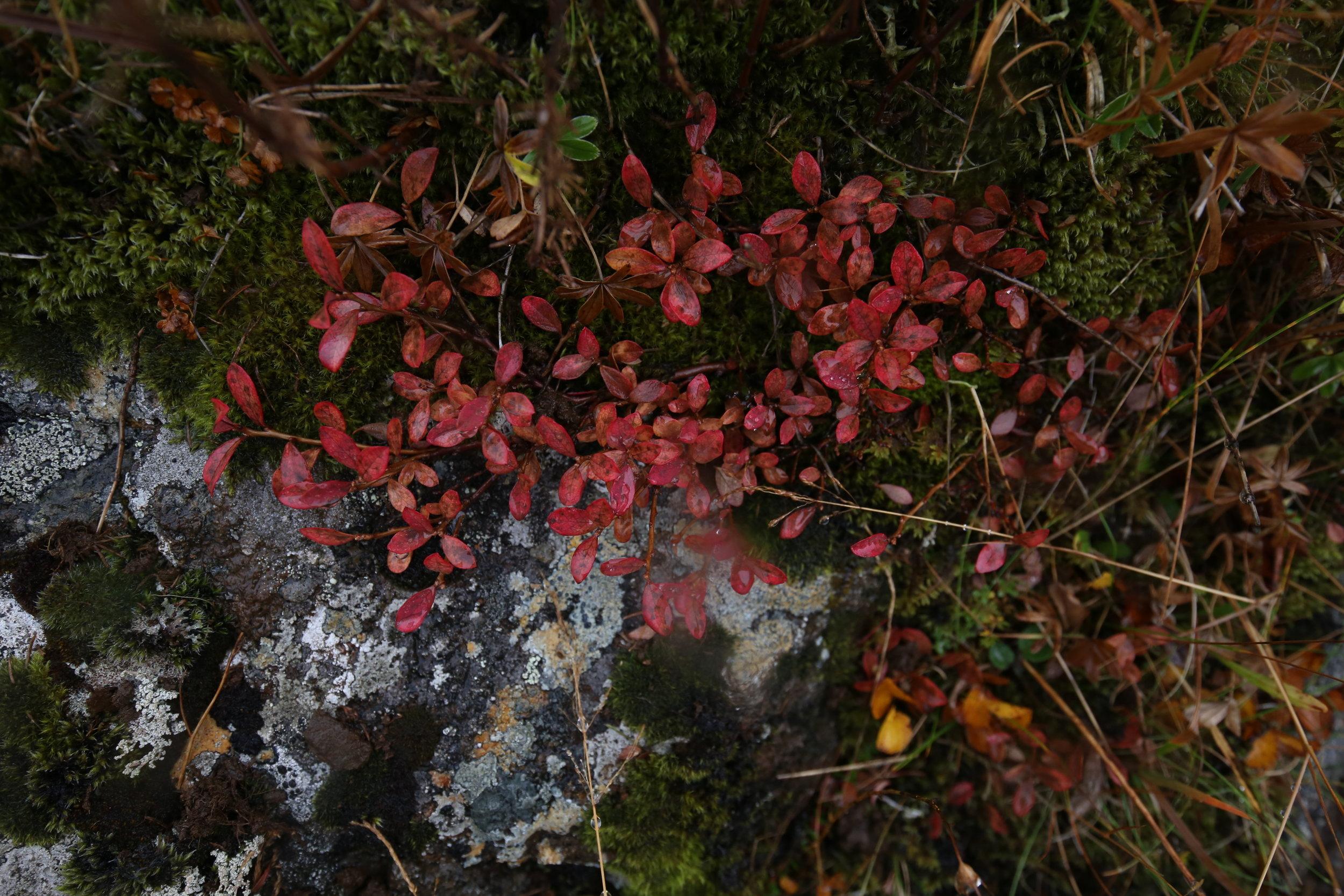 autumn iceland