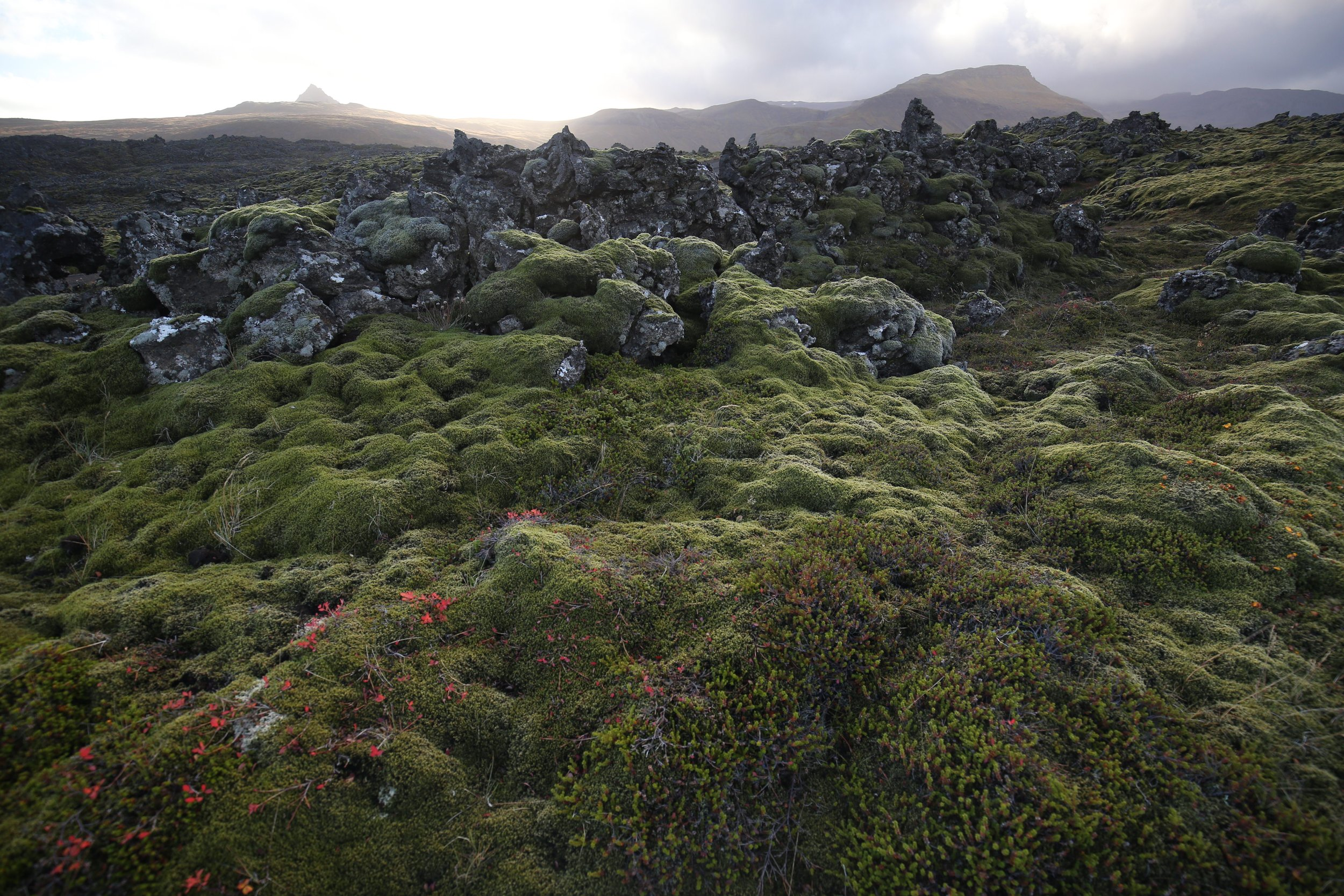 lava field berserkjahrune