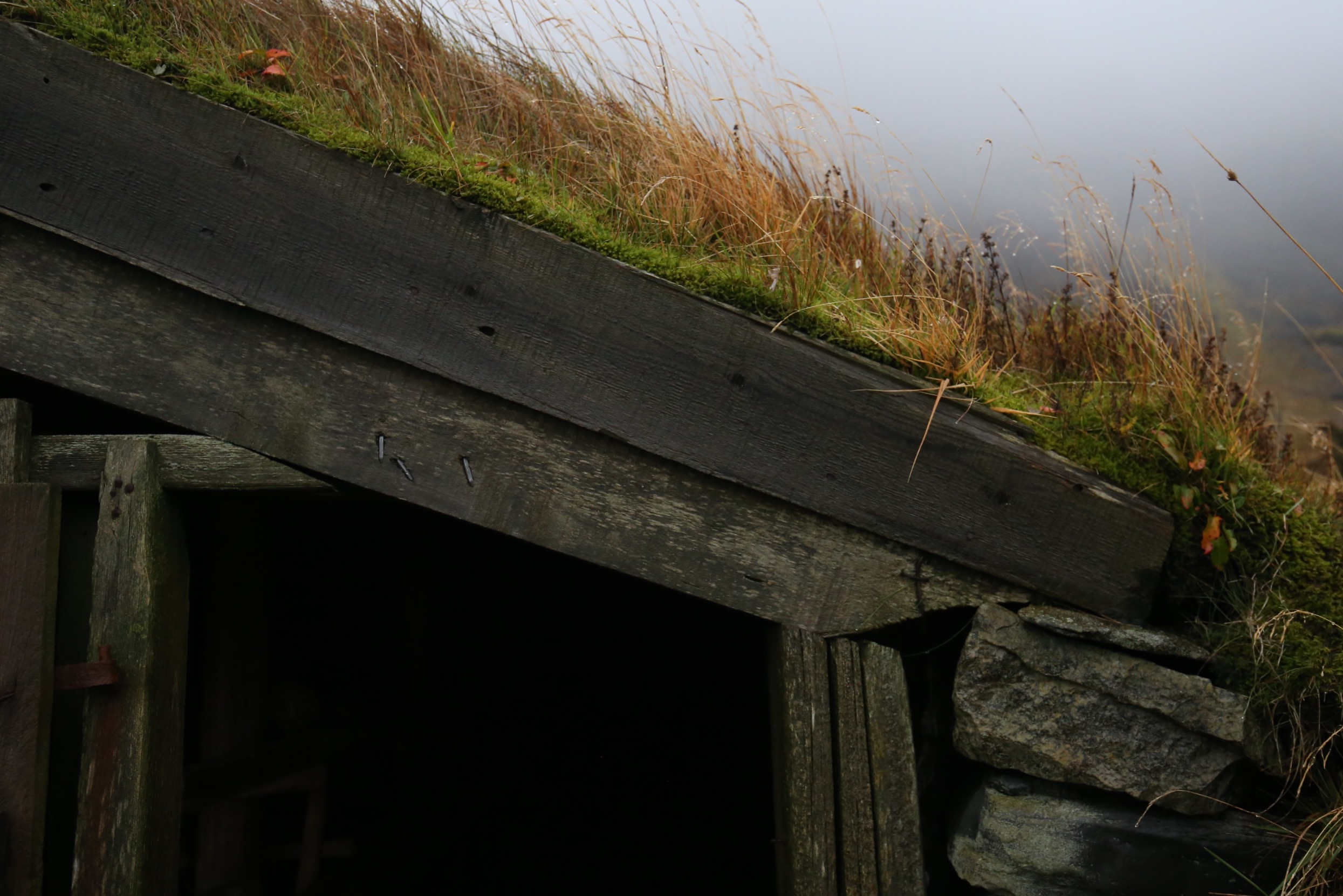 turf roof