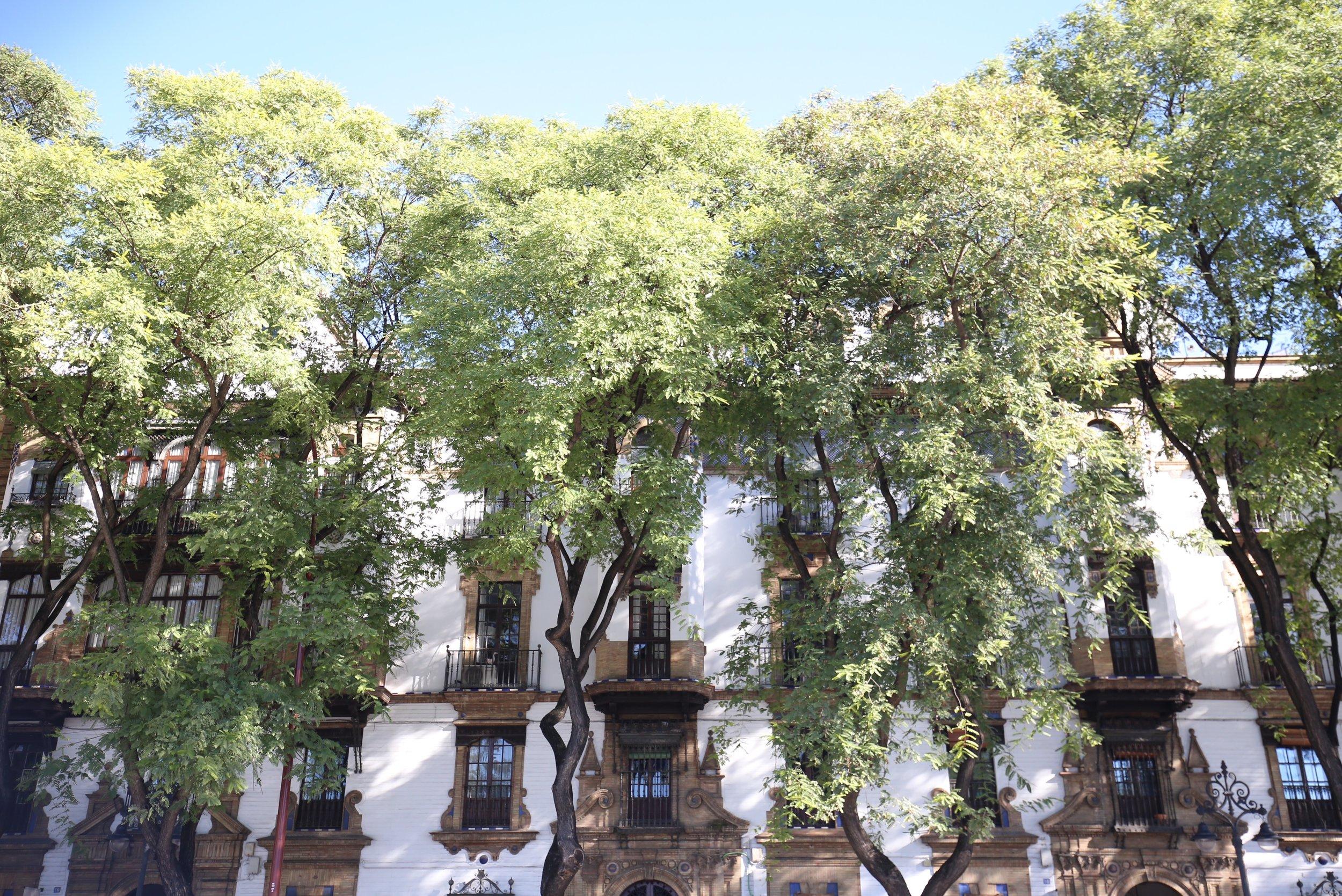 beautiful twisted trees Spain