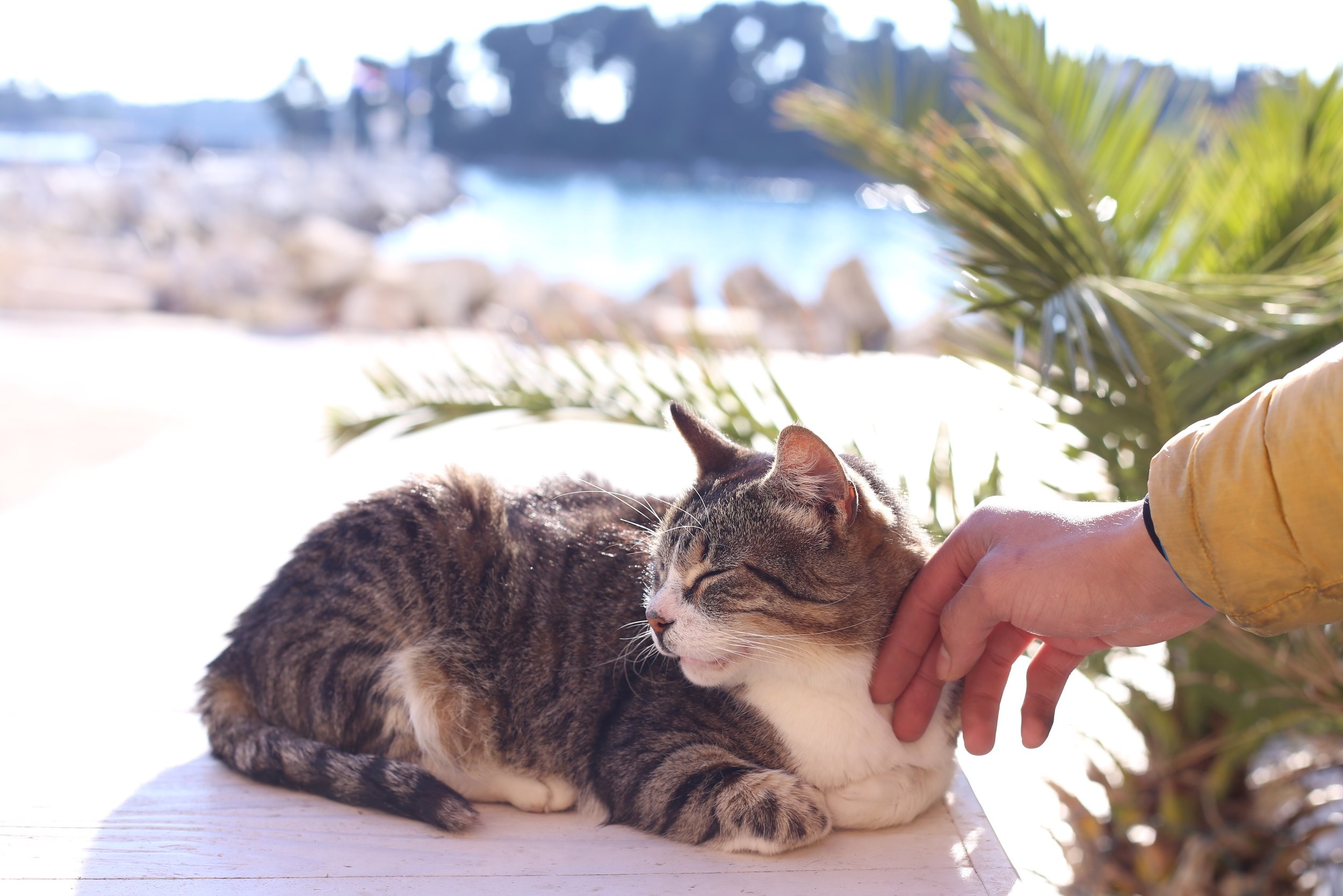 Cat sitting in the sun.