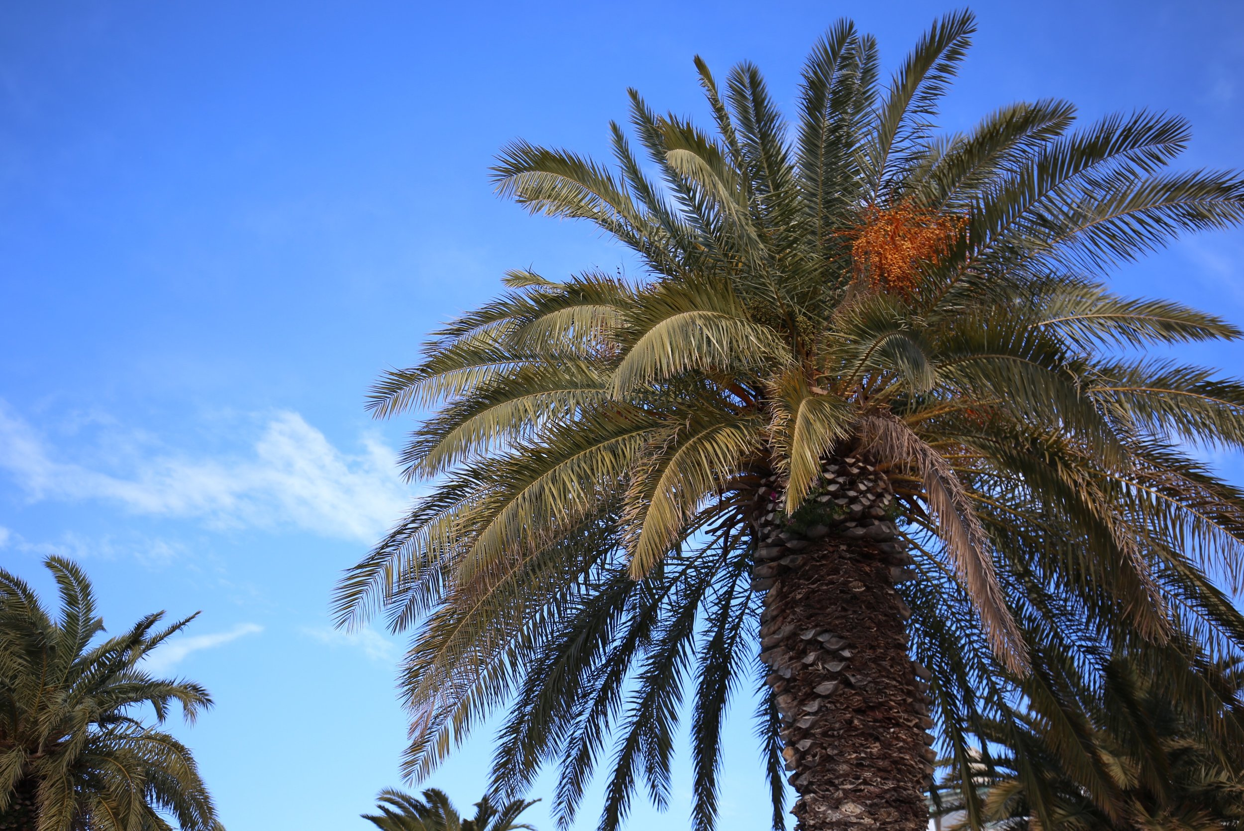 Palm trees and blue skies.