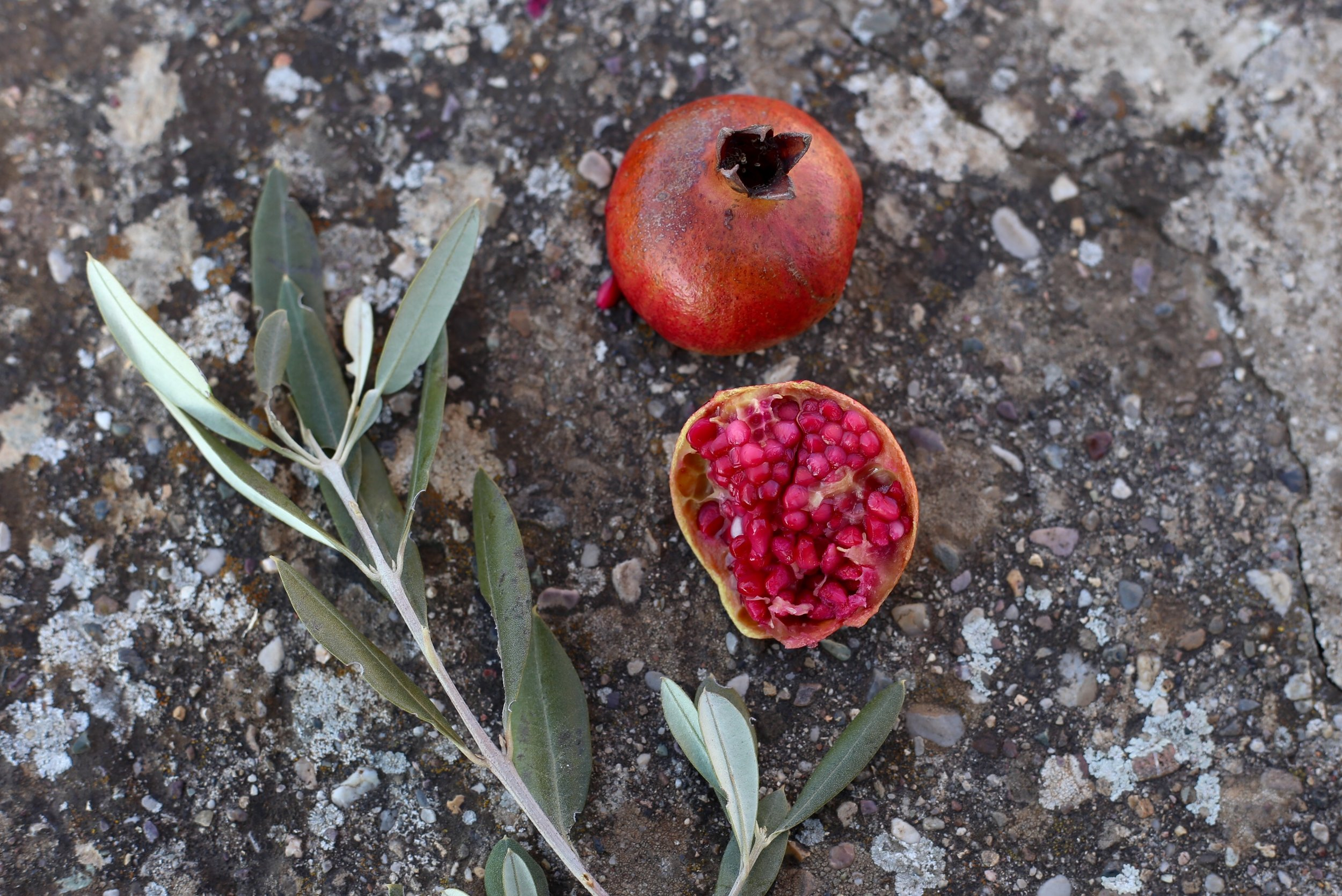 Wild pomegranate with pink seeds and an olive branch.