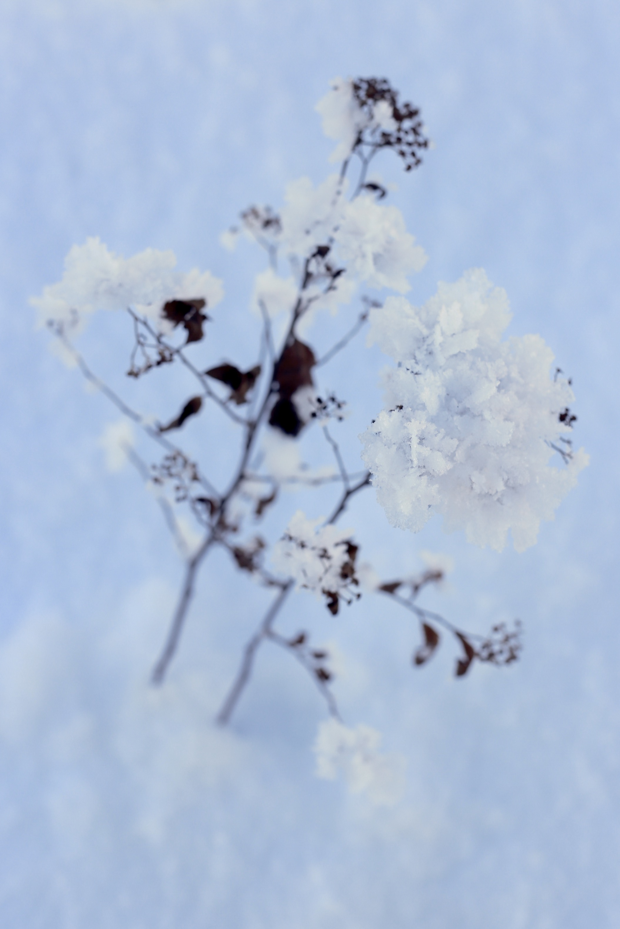 A snow flower made of ice crystals.