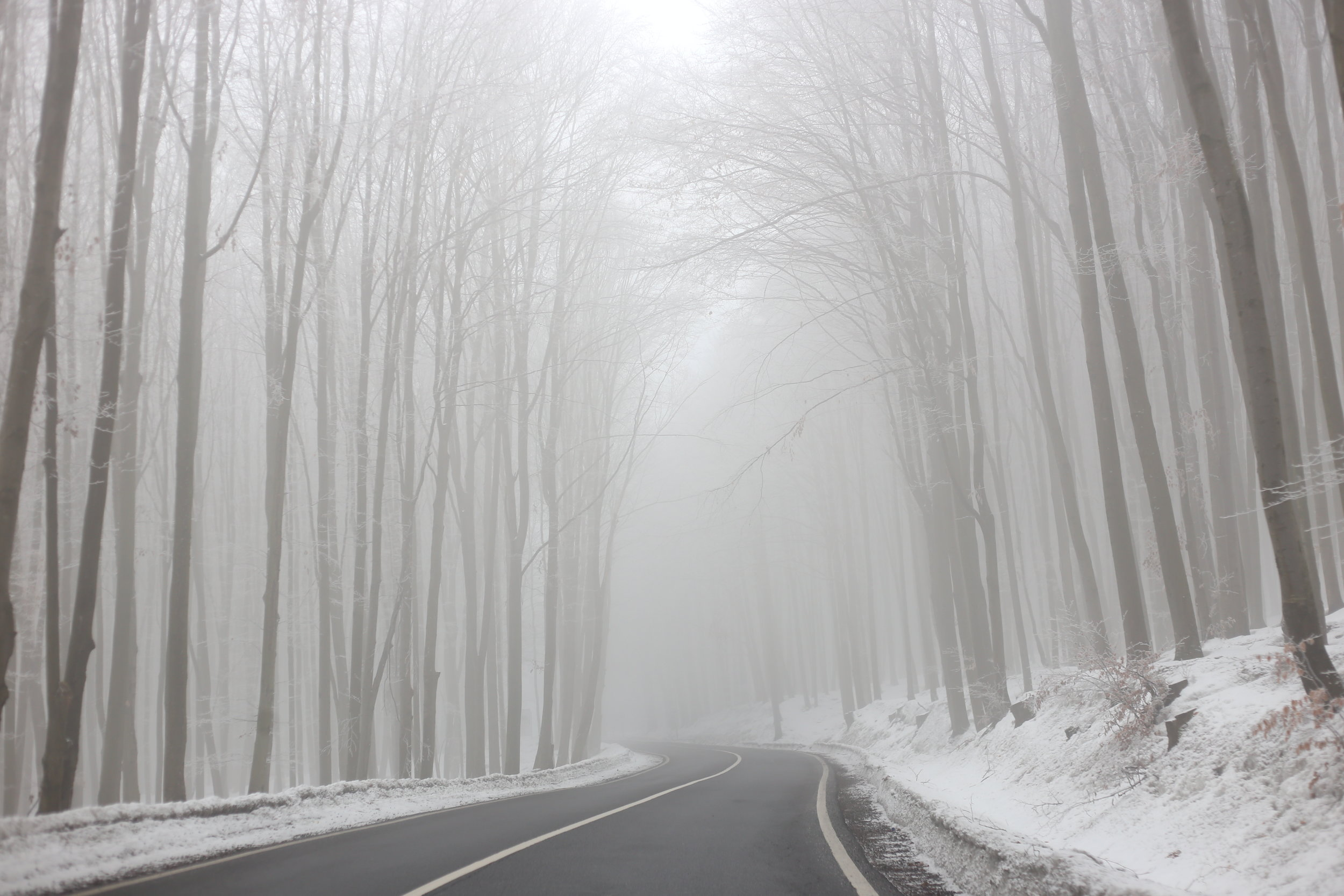 Road through an enchanted wood, in winter.