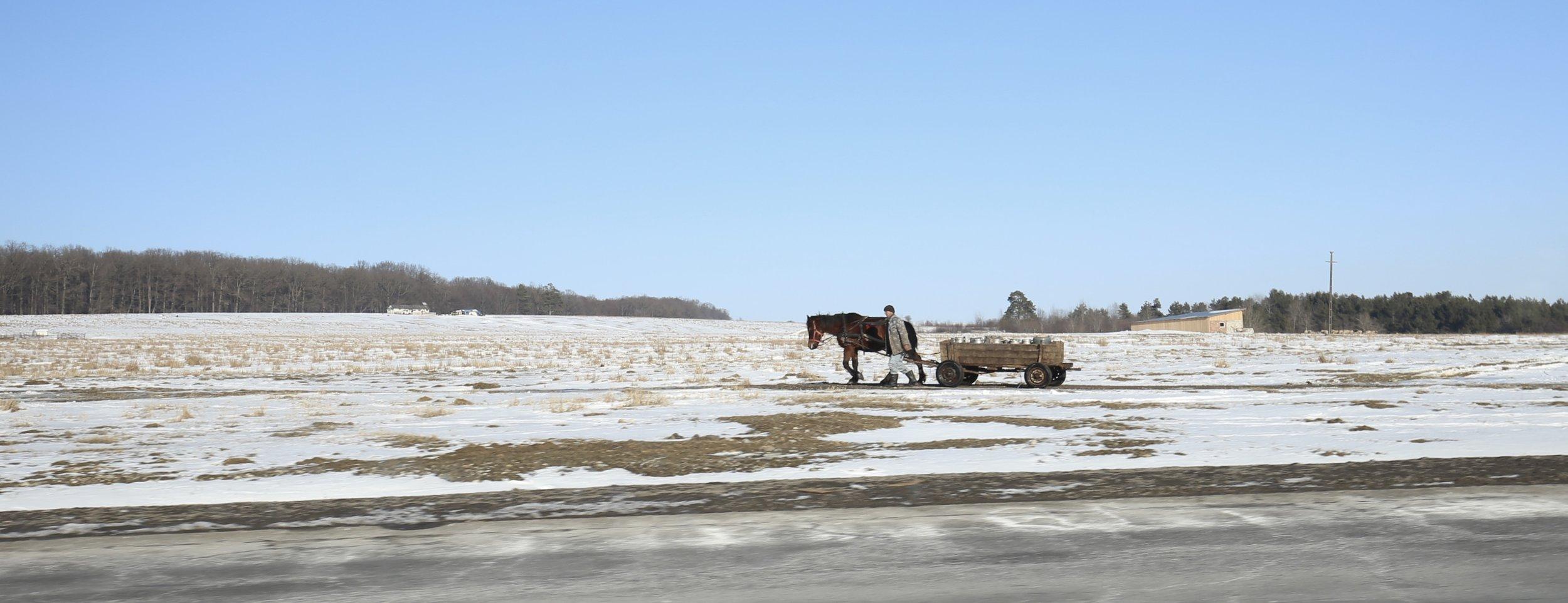 A romanian villager walks with a horse and cart across frozen fields.