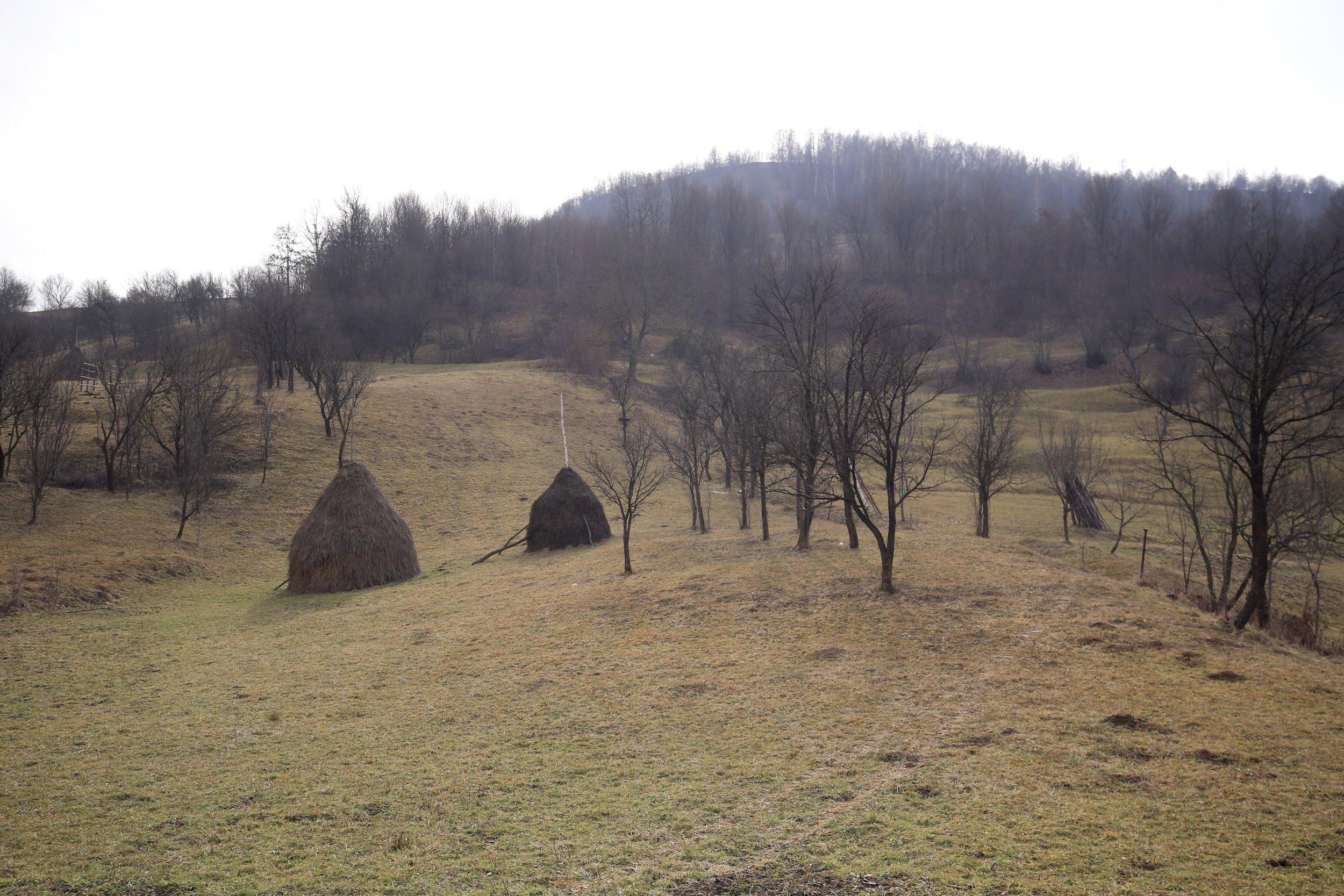 Haystacks in the fields of Maramures.
